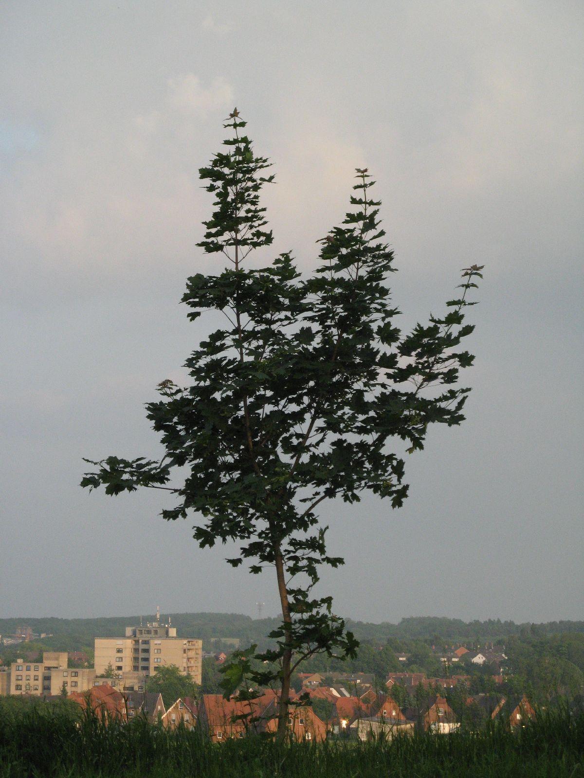 Plants-Trees_Photo_Texture_B_03250