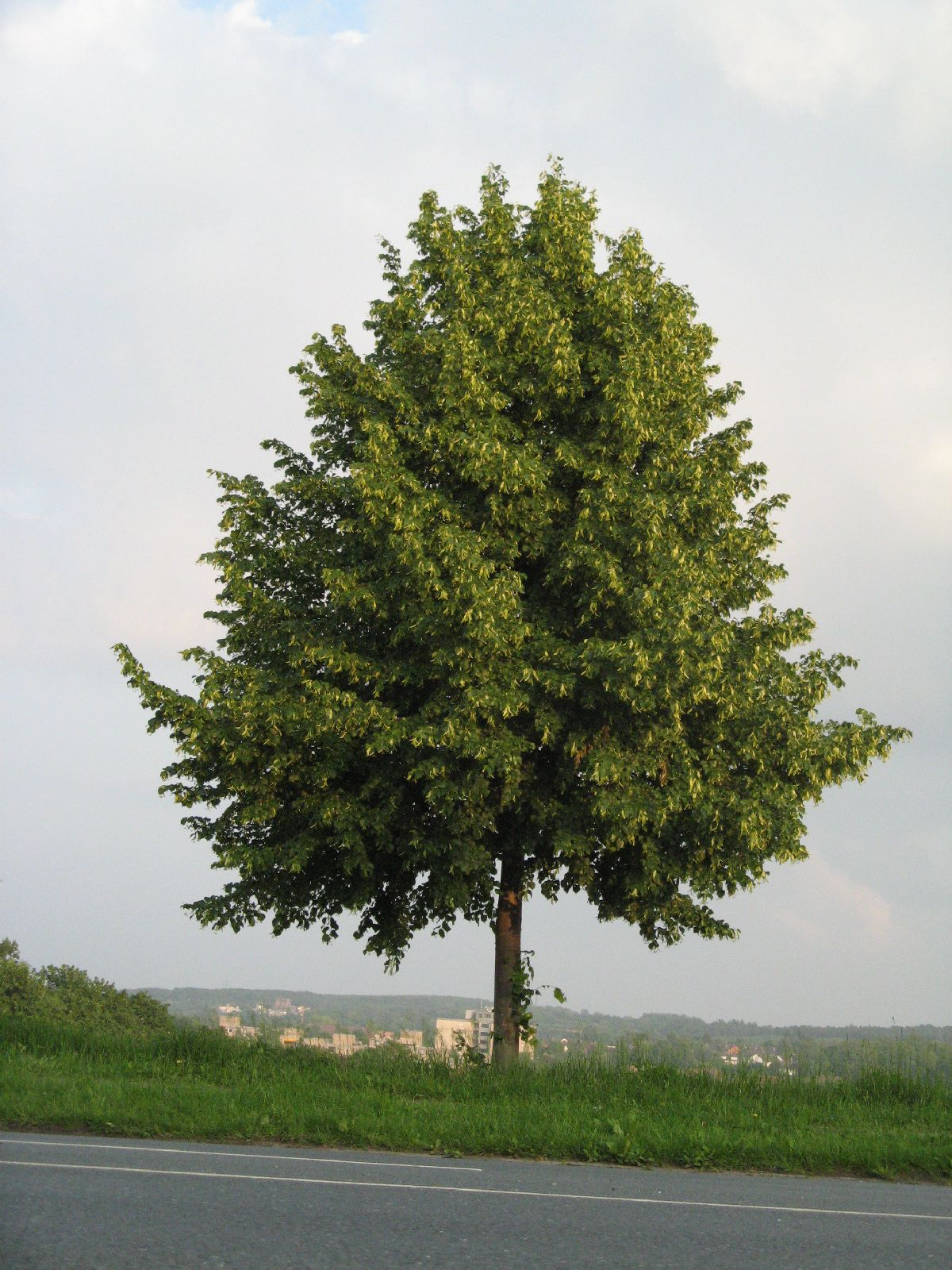 Plants-Trees_Photo_Texture_B_03280