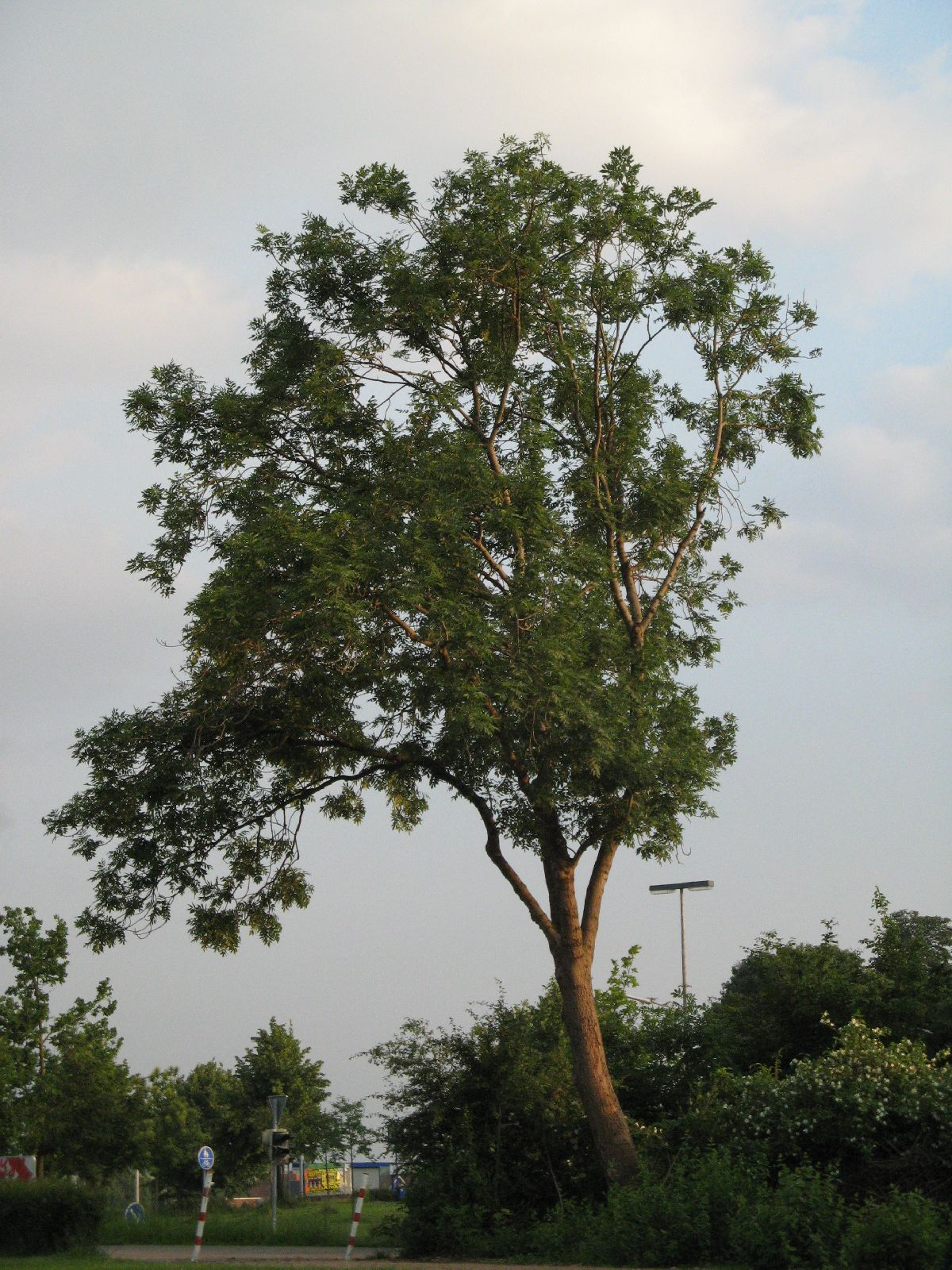 Plants-Trees_Photo_Texture_B_03300