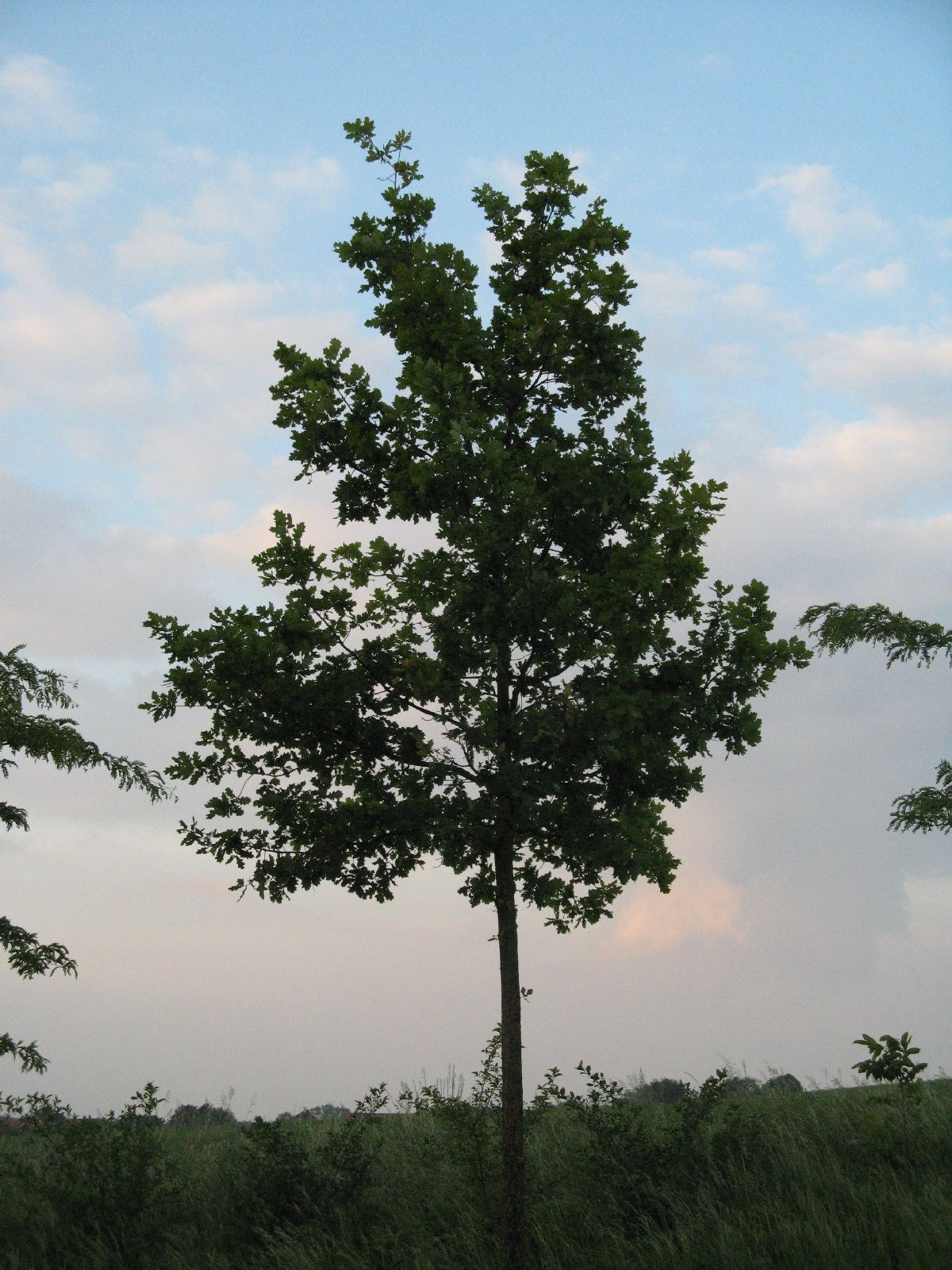 Which Trees Are Used To Make Paper: Free Tree Texture Photo Gallery