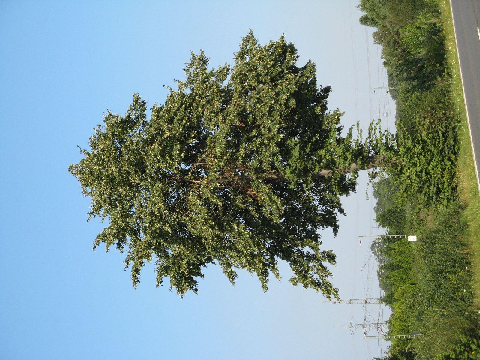 Plants-Trees_Photo_Texture_B_1174
