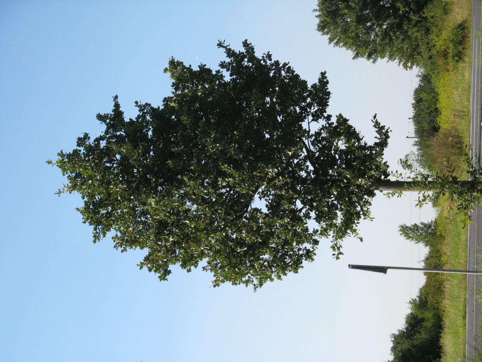 Plants-Trees_Photo_Texture_B_1178