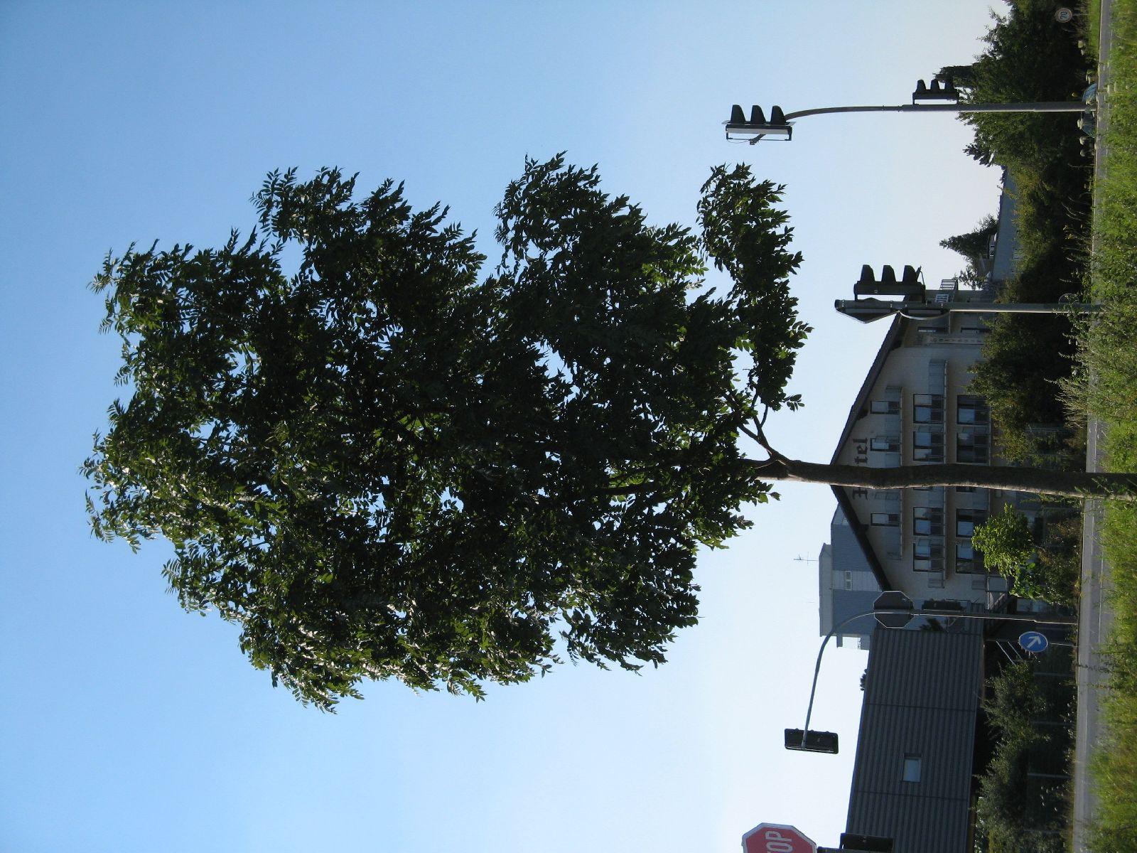 Plants-Trees_Photo_Texture_B_1179