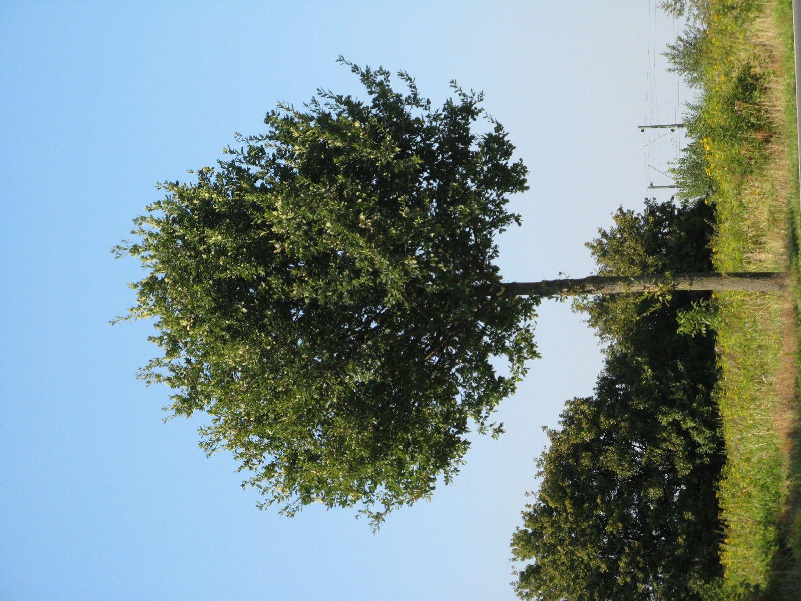 Plants-Trees_Photo_Texture_B_1190