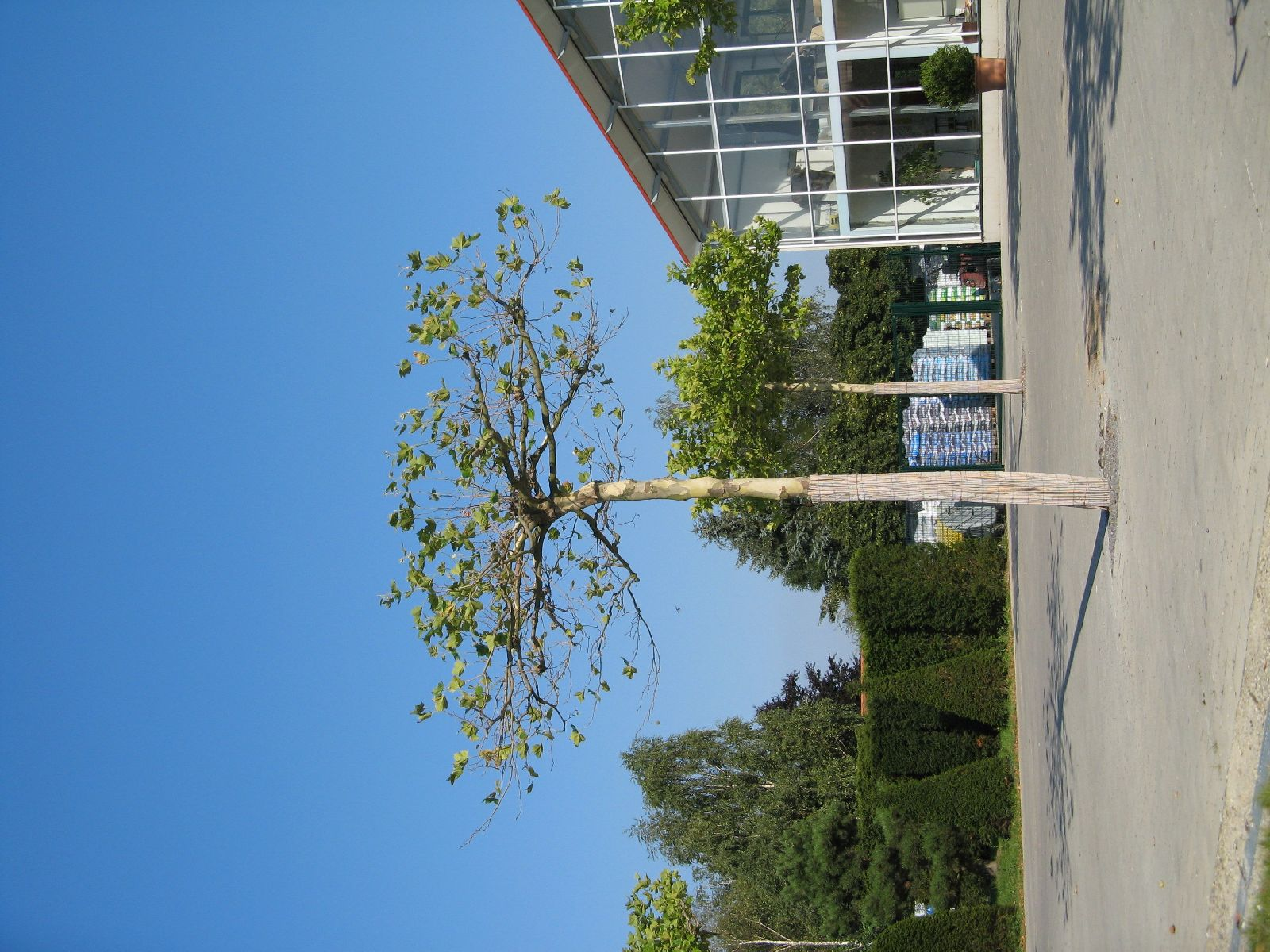Plants-Trees_Photo_Texture_B_1200