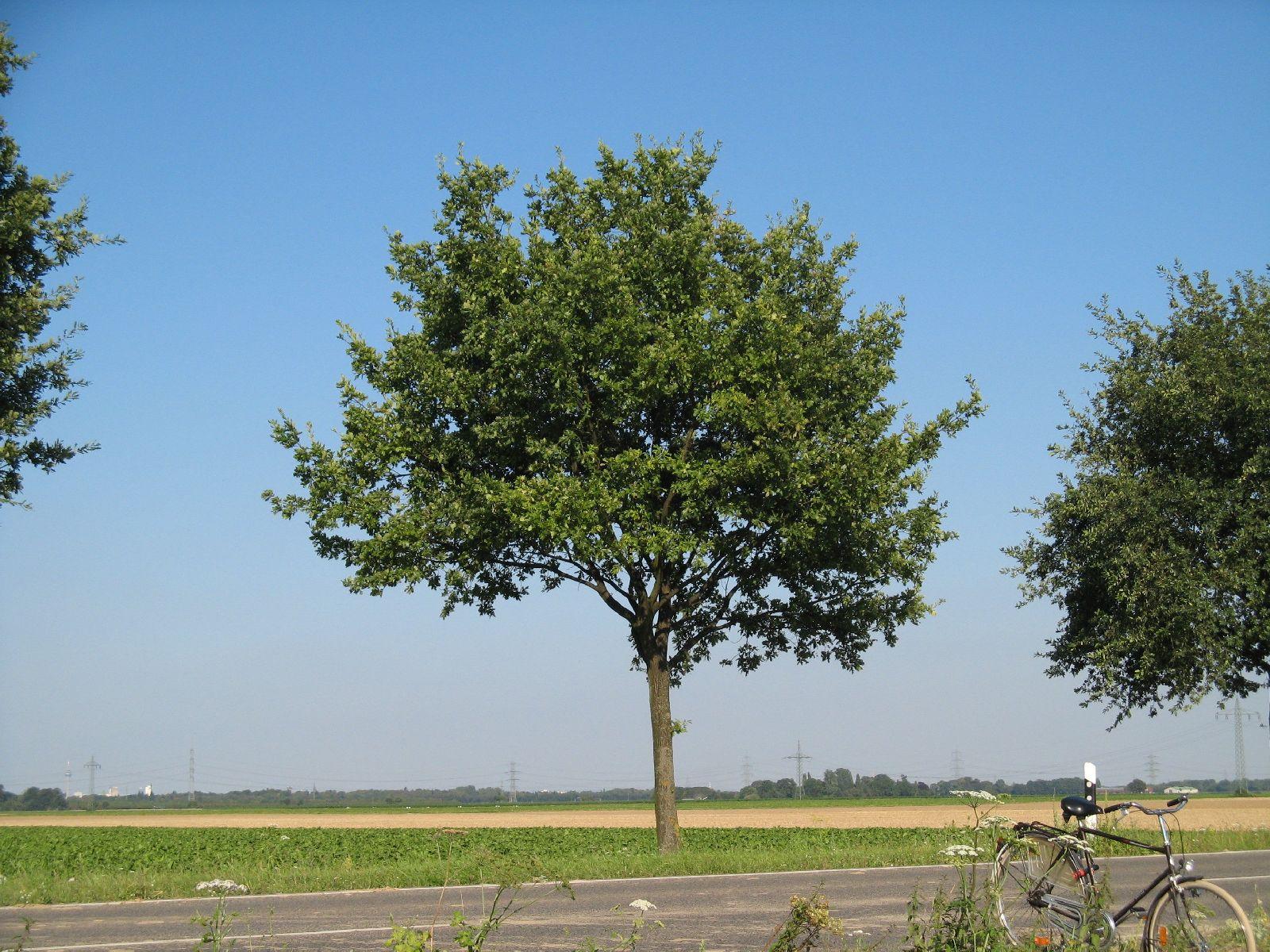 Plants-Trees_Photo_Texture_B_1214