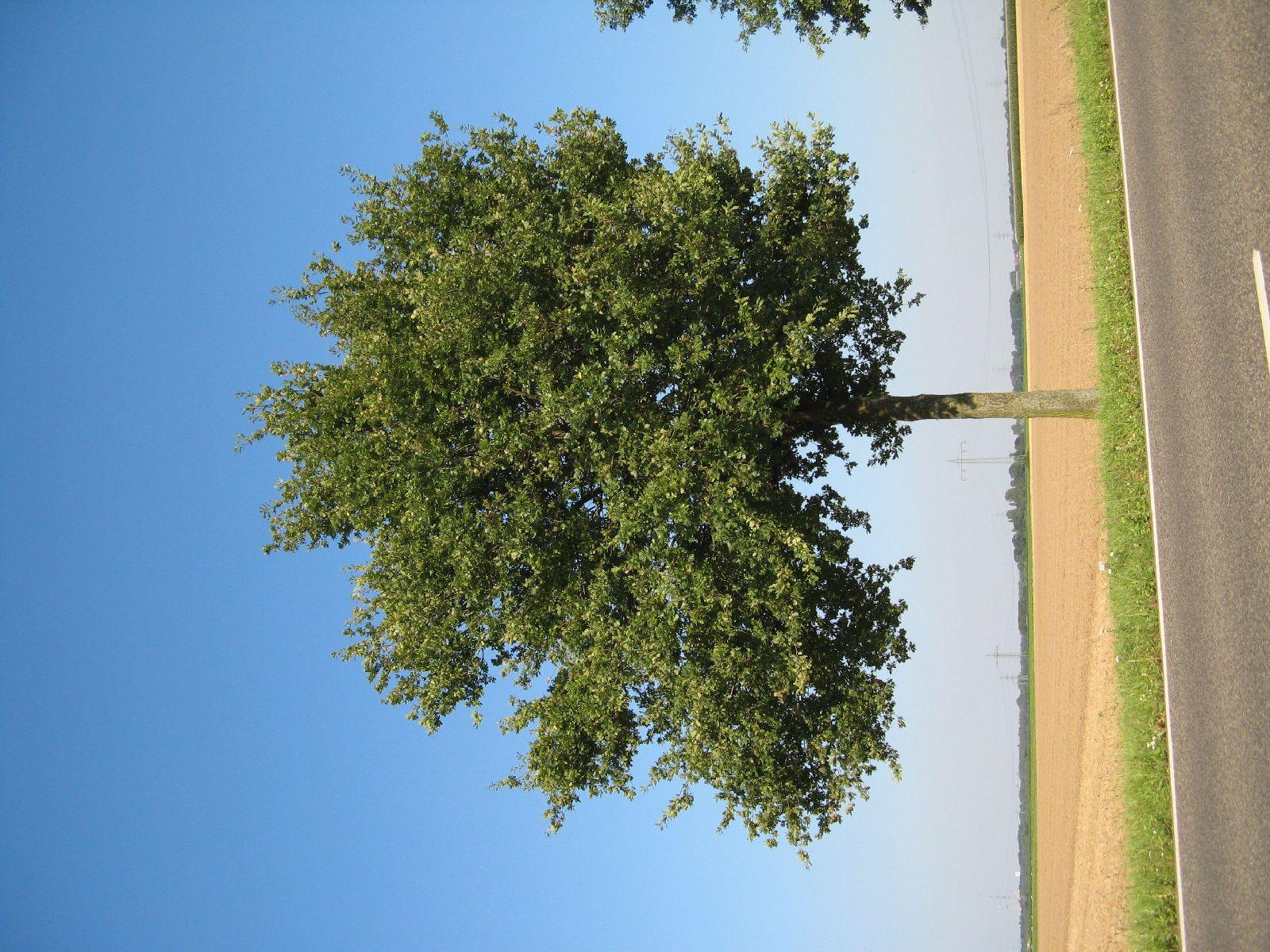 Plants-Trees_Photo_Texture_B_1230