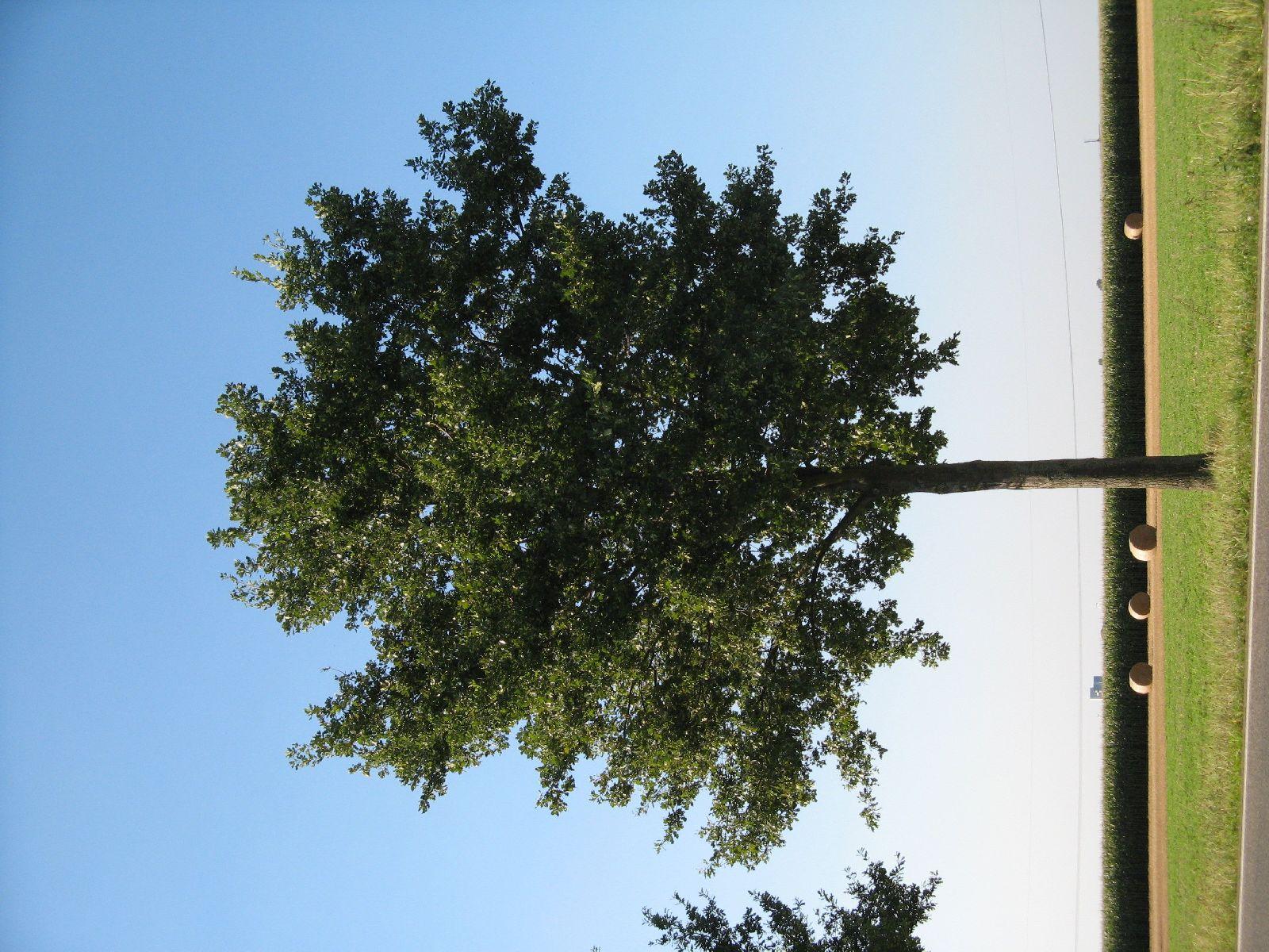 Plants-Trees_Photo_Texture_B_1249