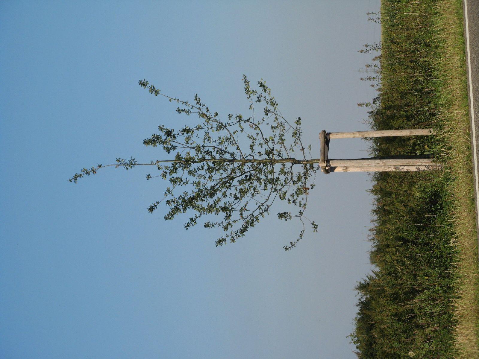 Plants-Trees_Photo_Texture_B_1250