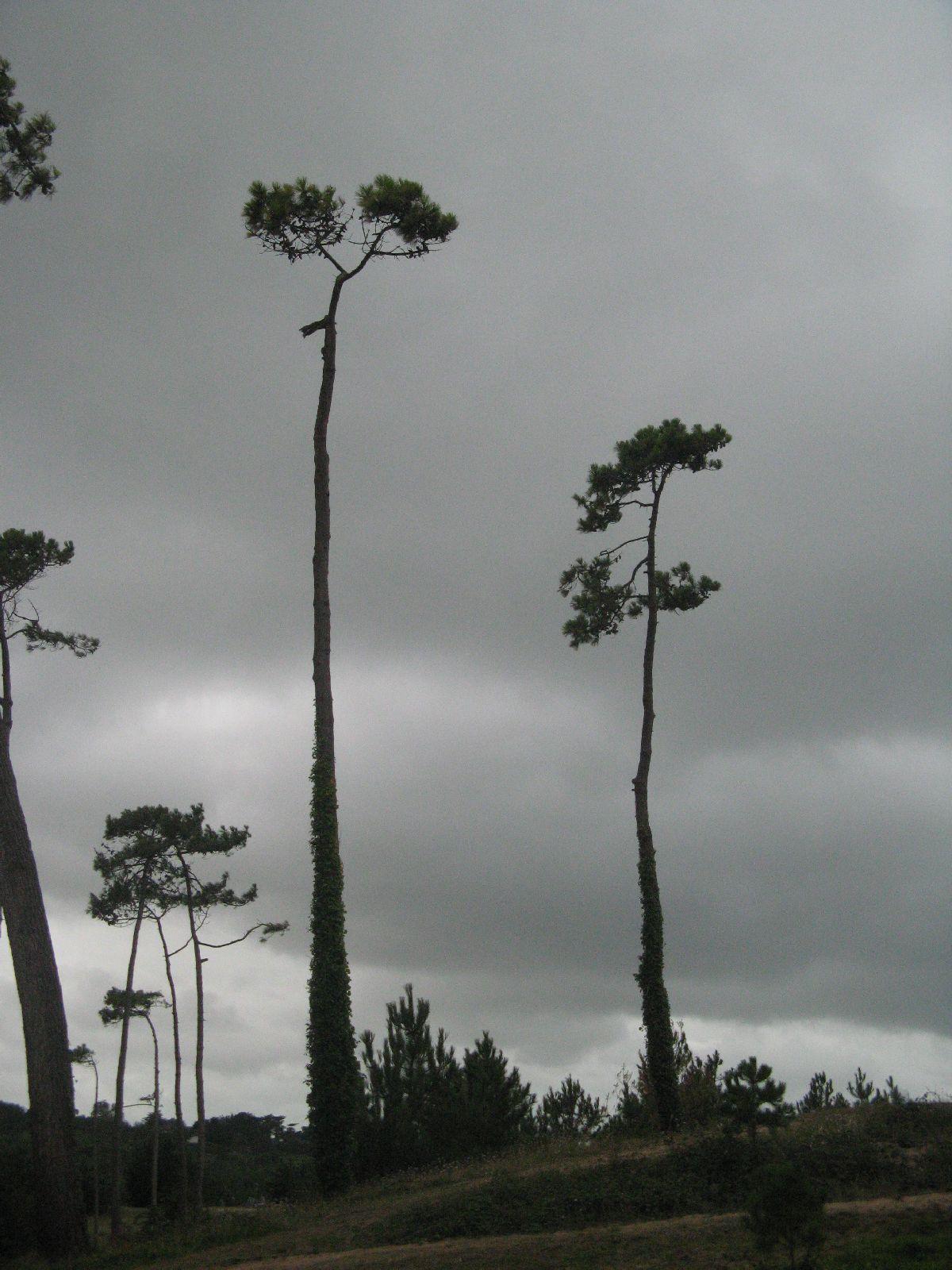 Plants-Trees_Photo_Texture_B_2410