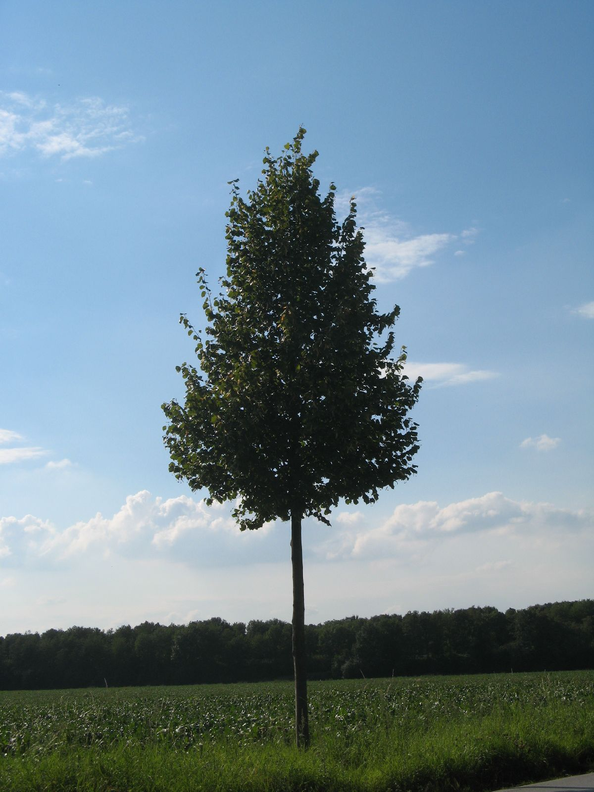 Plants-Trees_Photo_Texture_B_26880