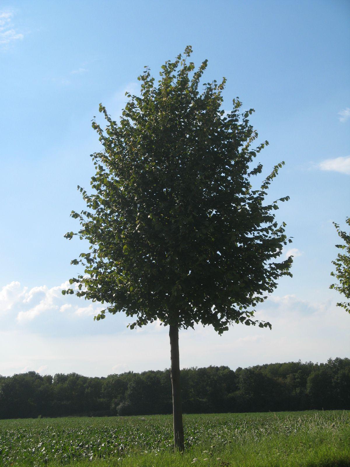 Plants-Trees_Photo_Texture_B_26900