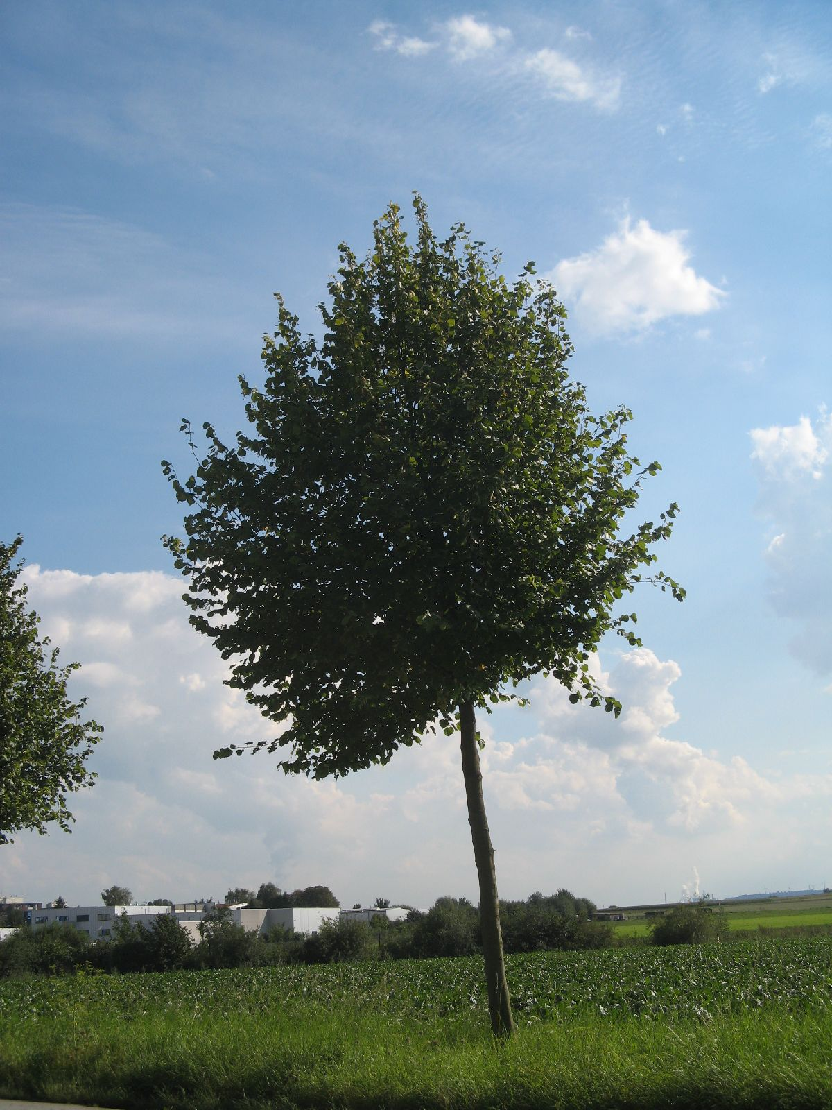 Plants-Trees_Photo_Texture_B_26910
