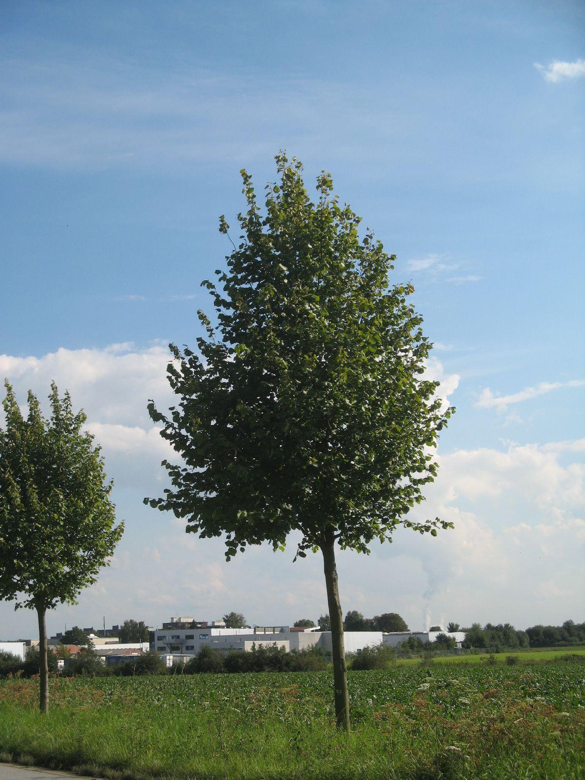 Plants-Trees_Photo_Texture_B_26930