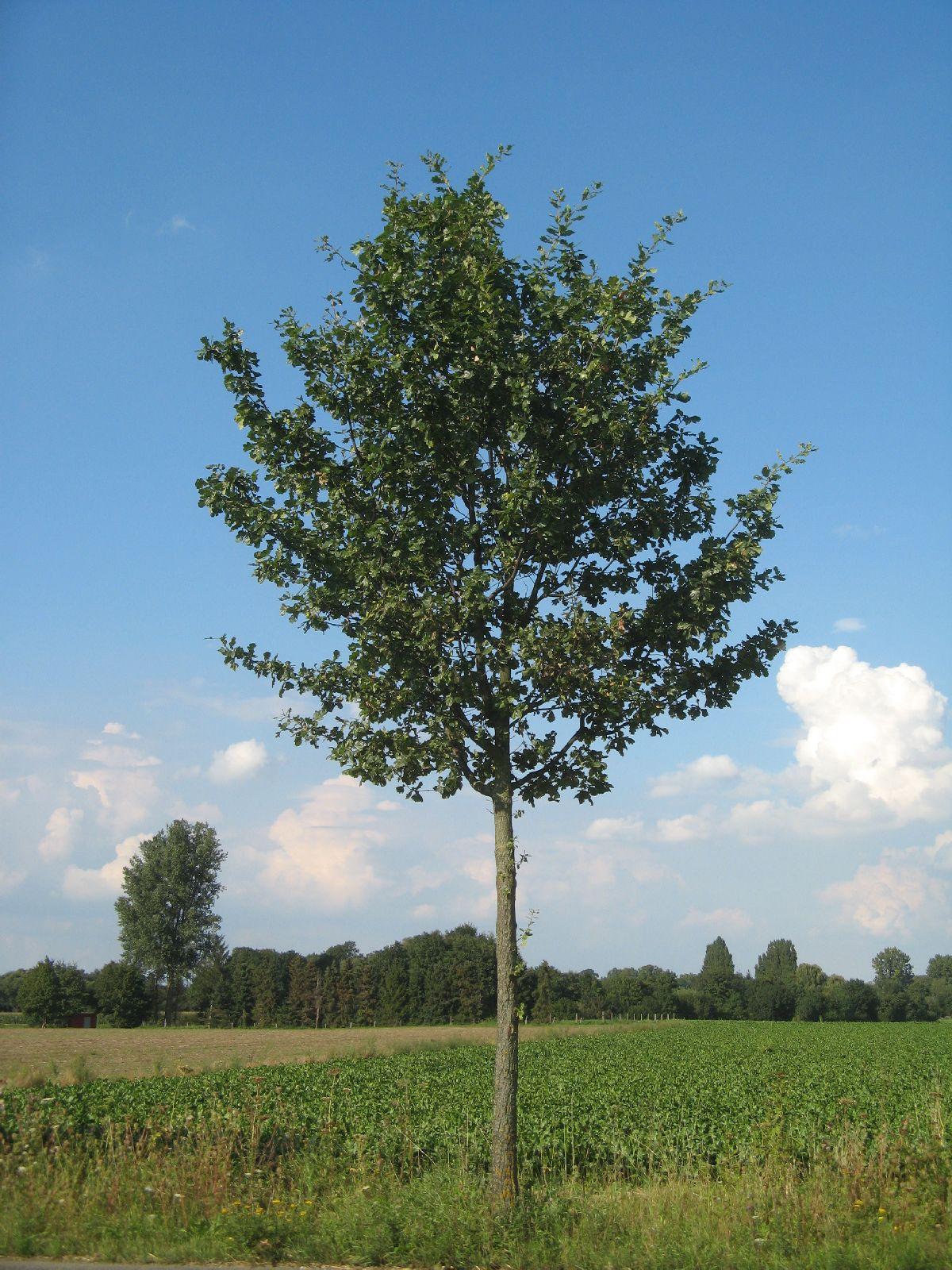 Plants-Trees_Photo_Texture_B_26970