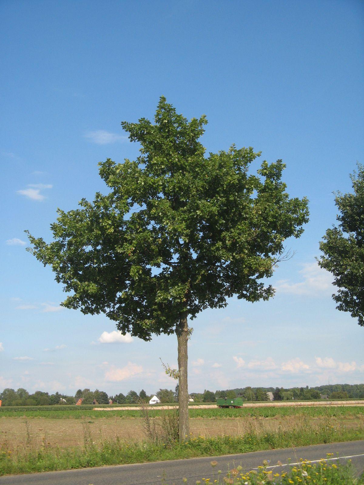 Plants-Trees_Photo_Texture_B_27000