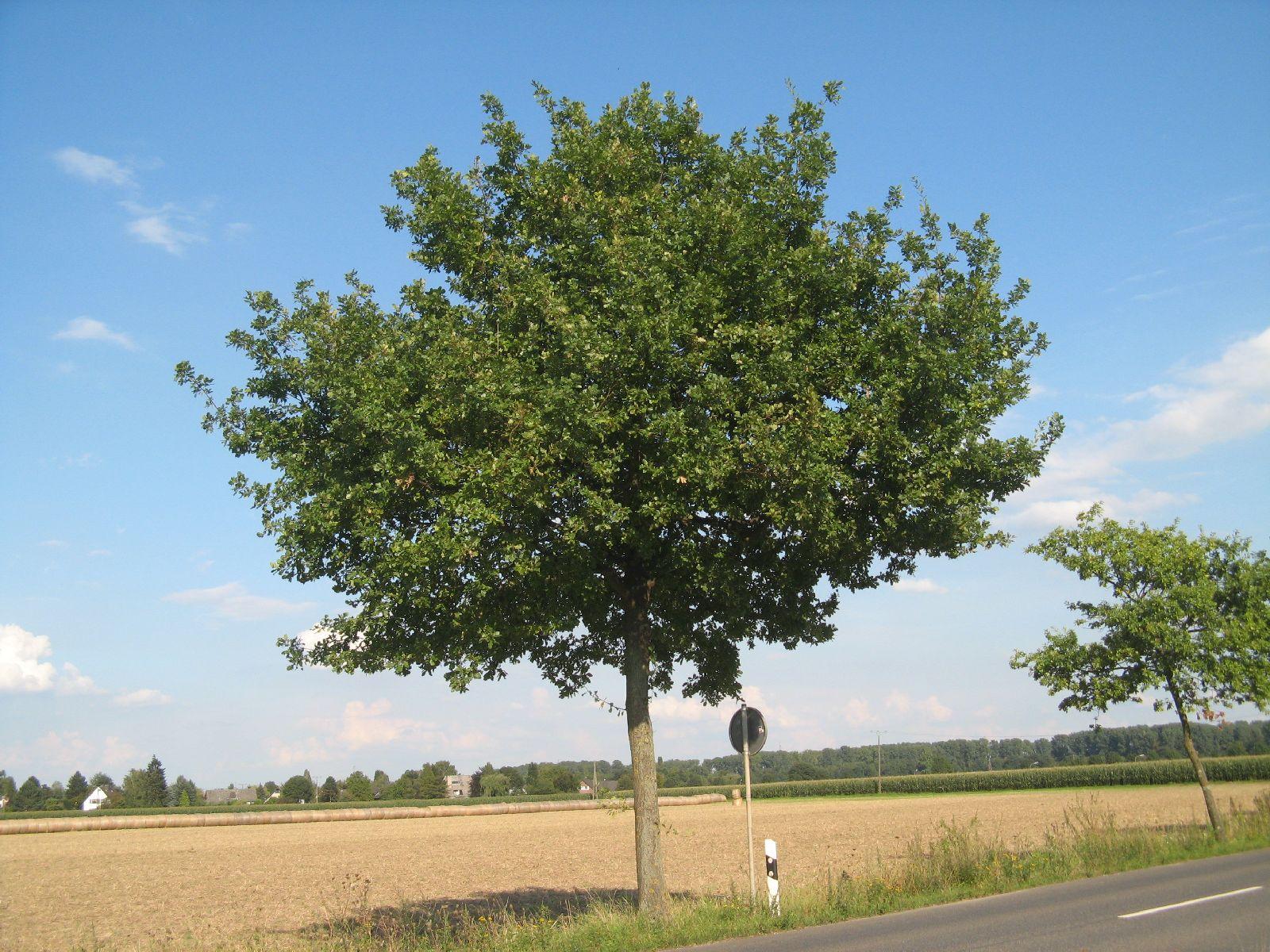 Plants-Trees_Photo_Texture_B_27120