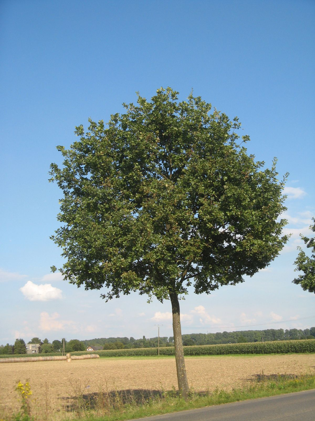 Plants-Trees_Photo_Texture_B_27140
