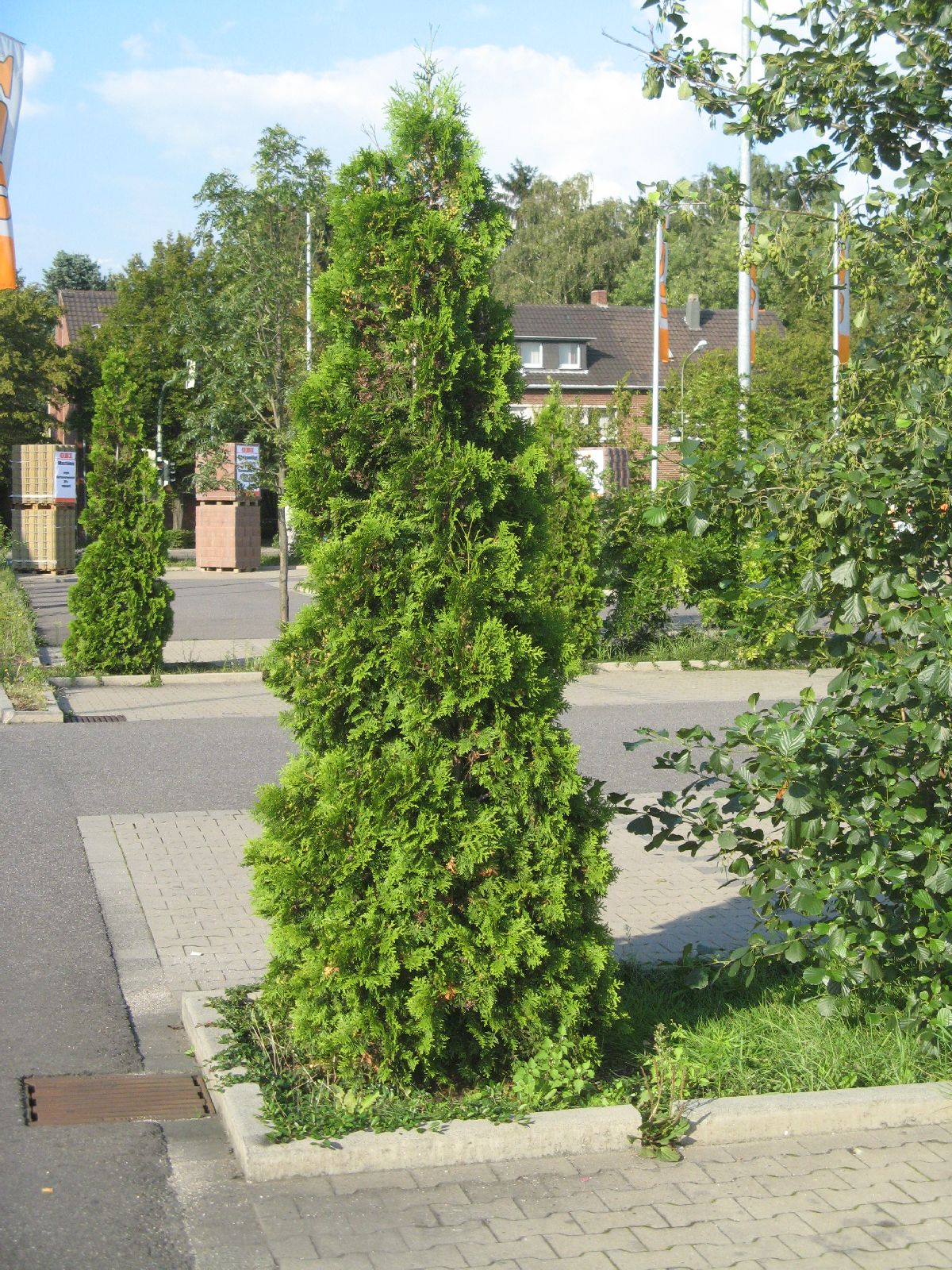 Plants-Trees_Photo_Texture_B_2739