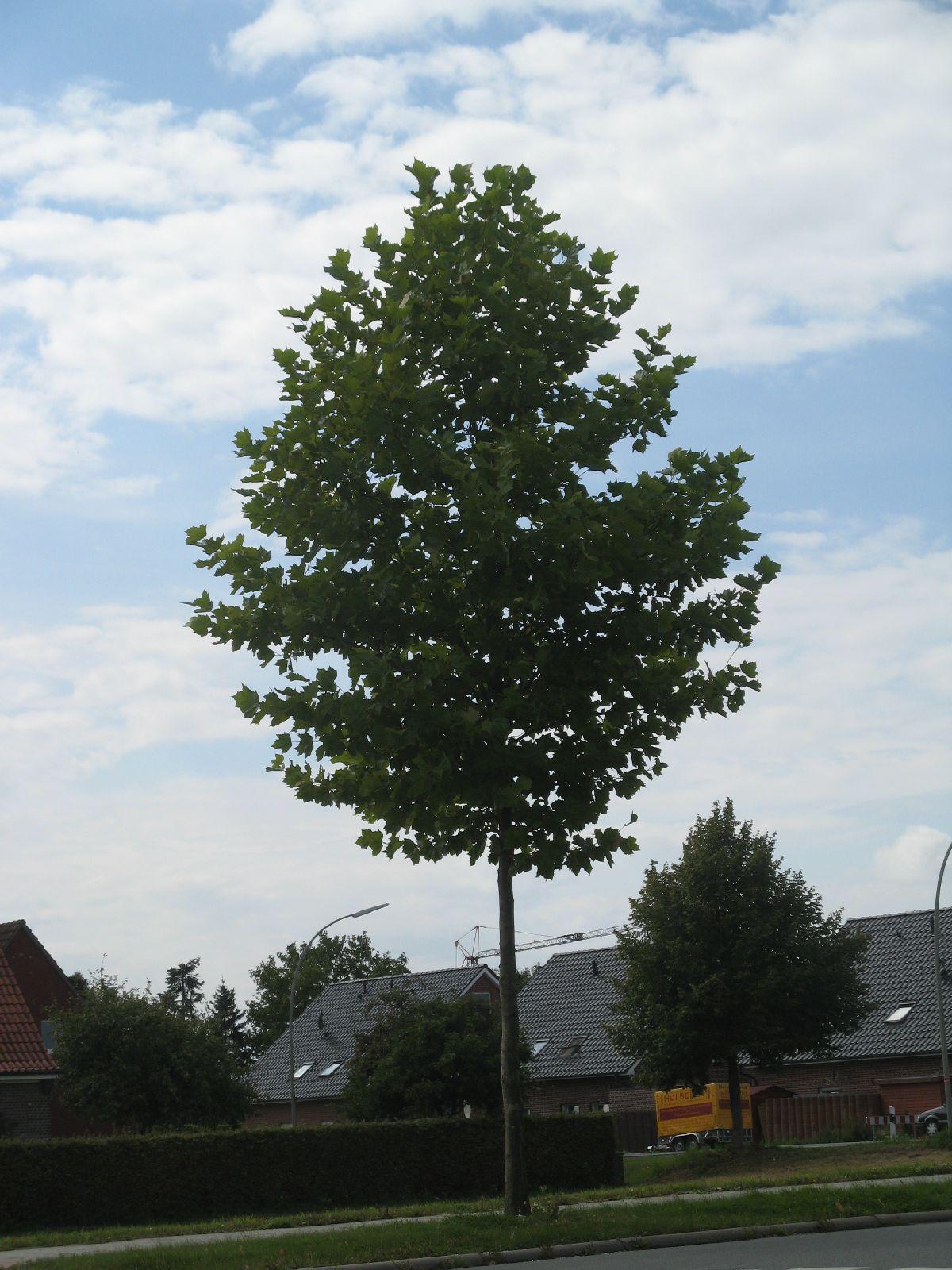 Plants-Trees_Photo_Texture_B_2859