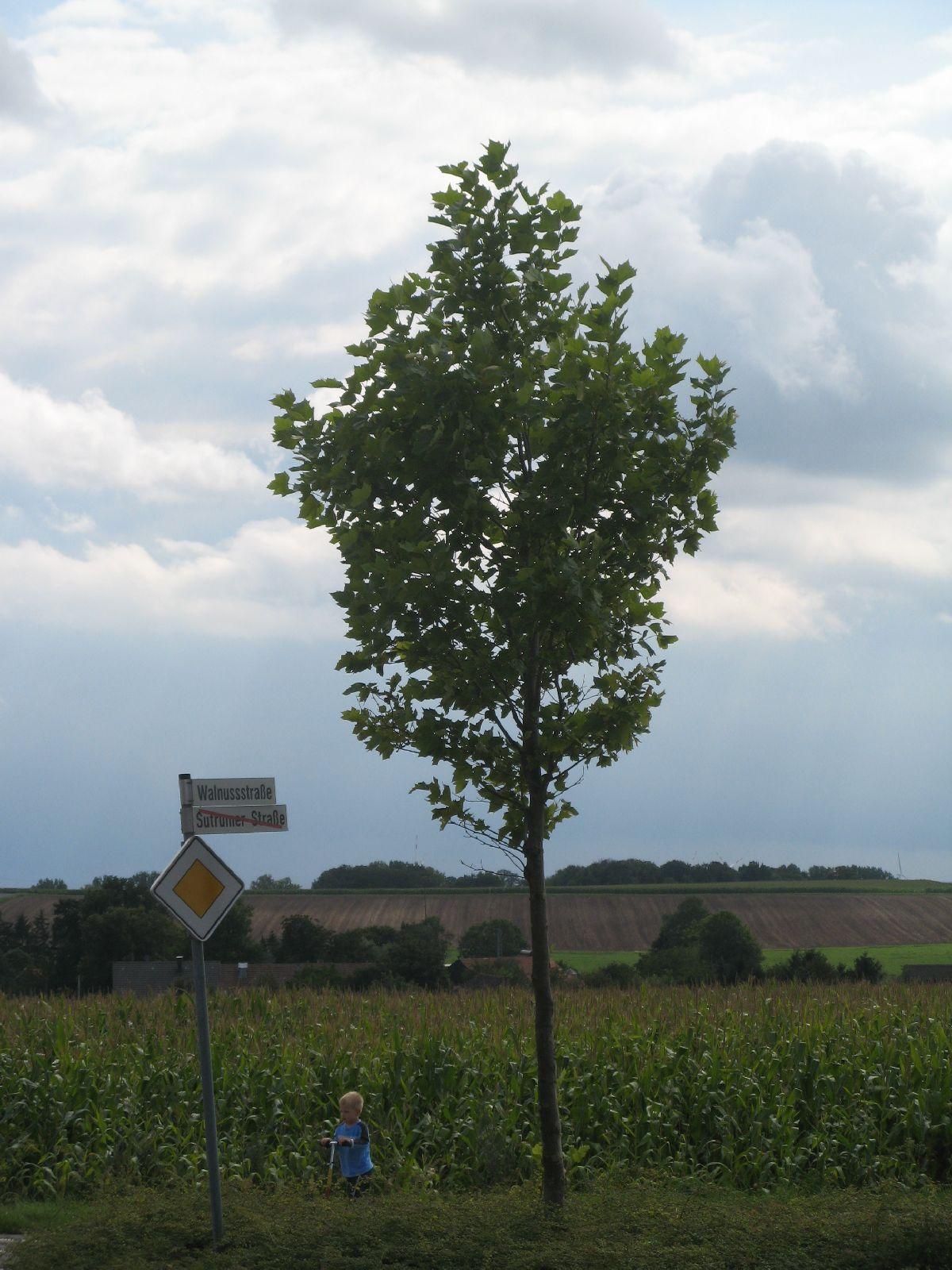 Plants-Trees_Photo_Texture_B_2860