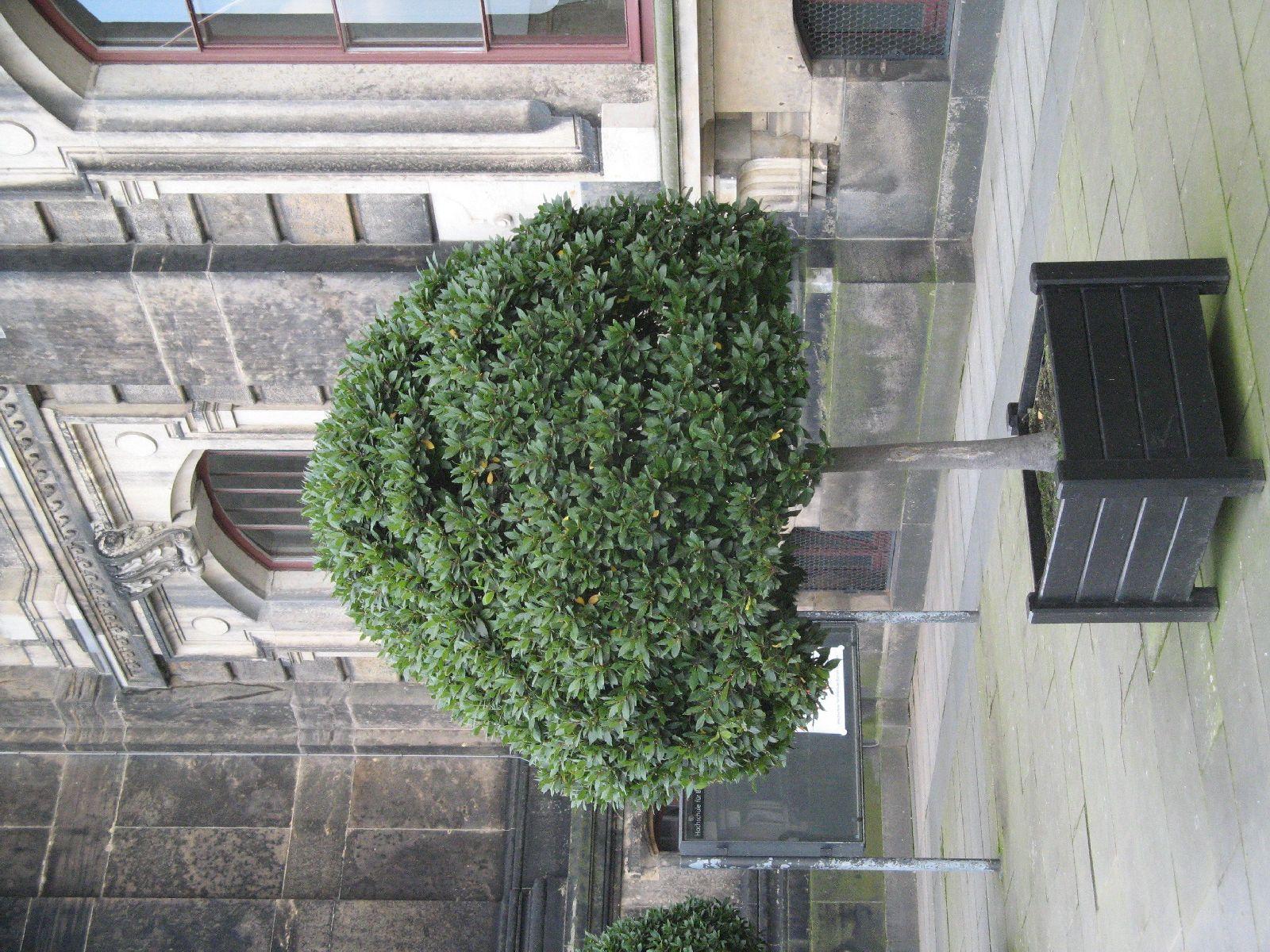 Plants-Trees_Photo_Texture_B_3617