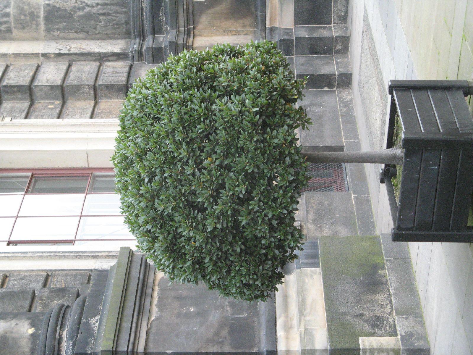 Plants-Trees_Photo_Texture_B_3619