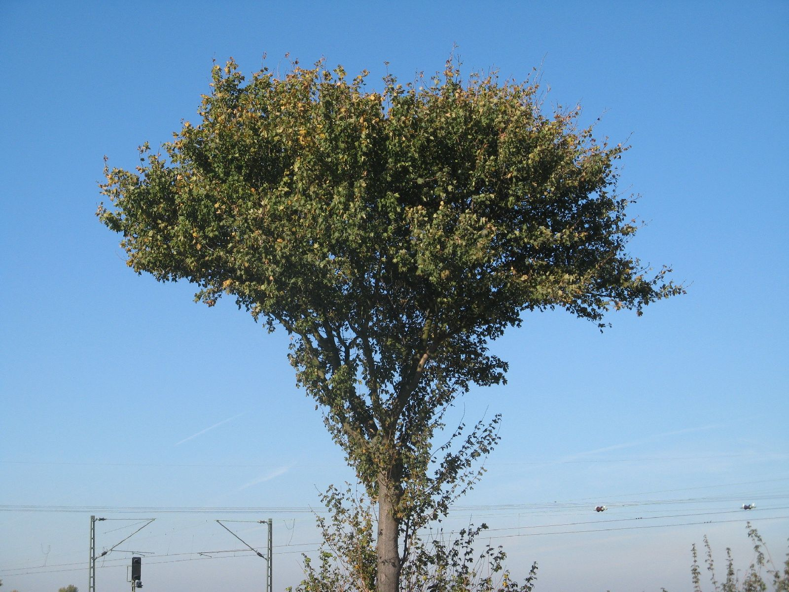 Plants-Trees_Photo_Texture_B_3730