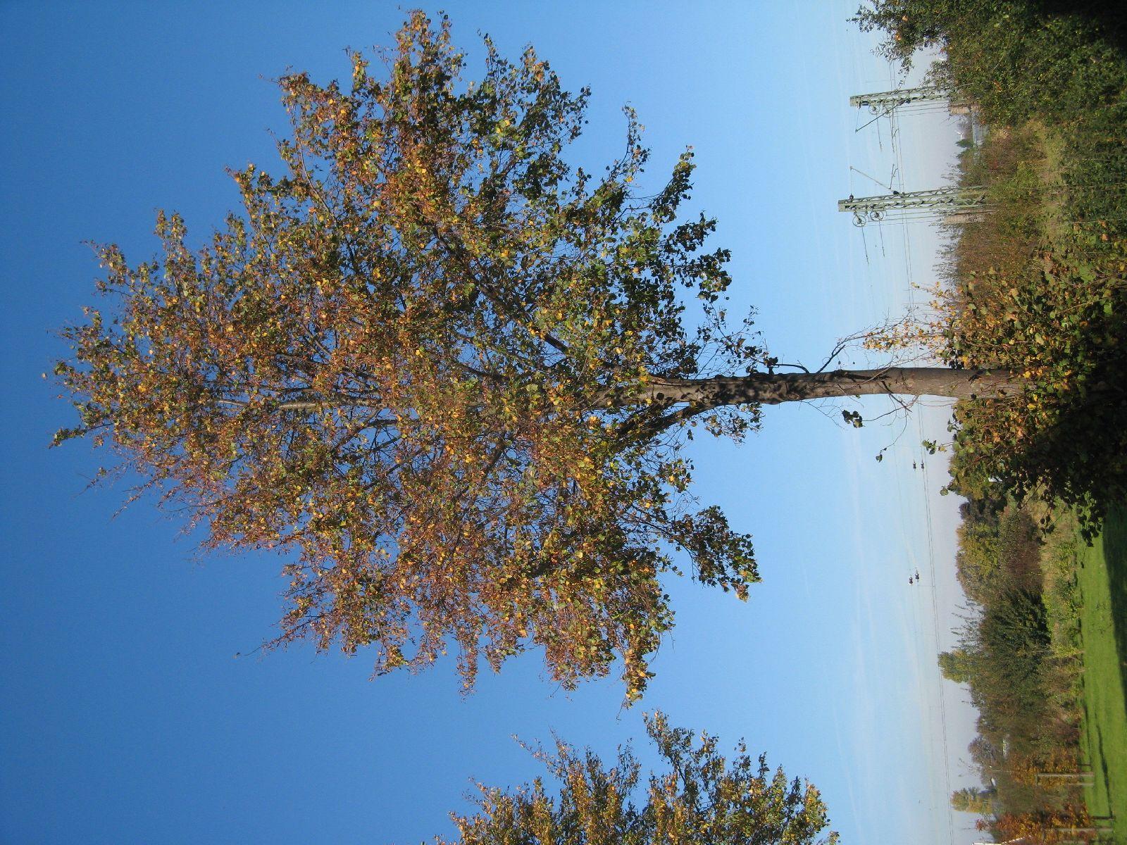 Plants-Trees_Photo_Texture_B_3732