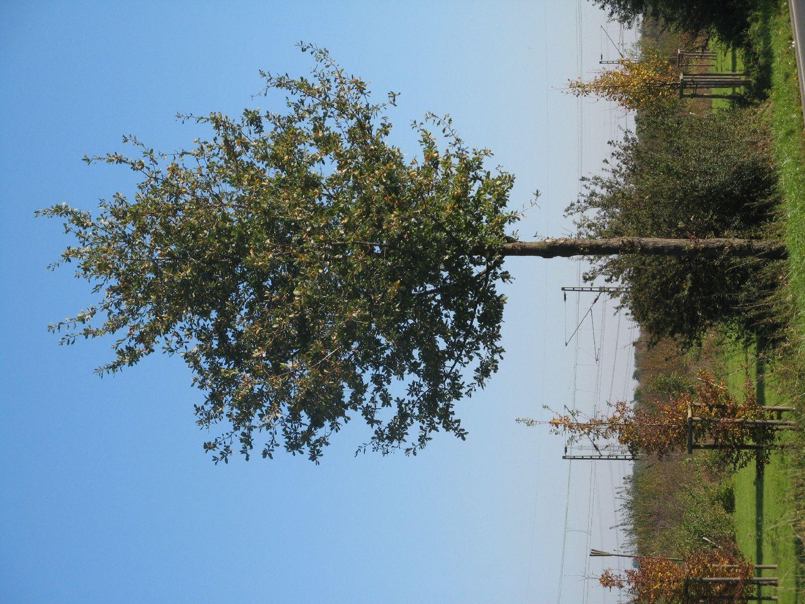 Plants-Trees_Photo_Texture_B_3734