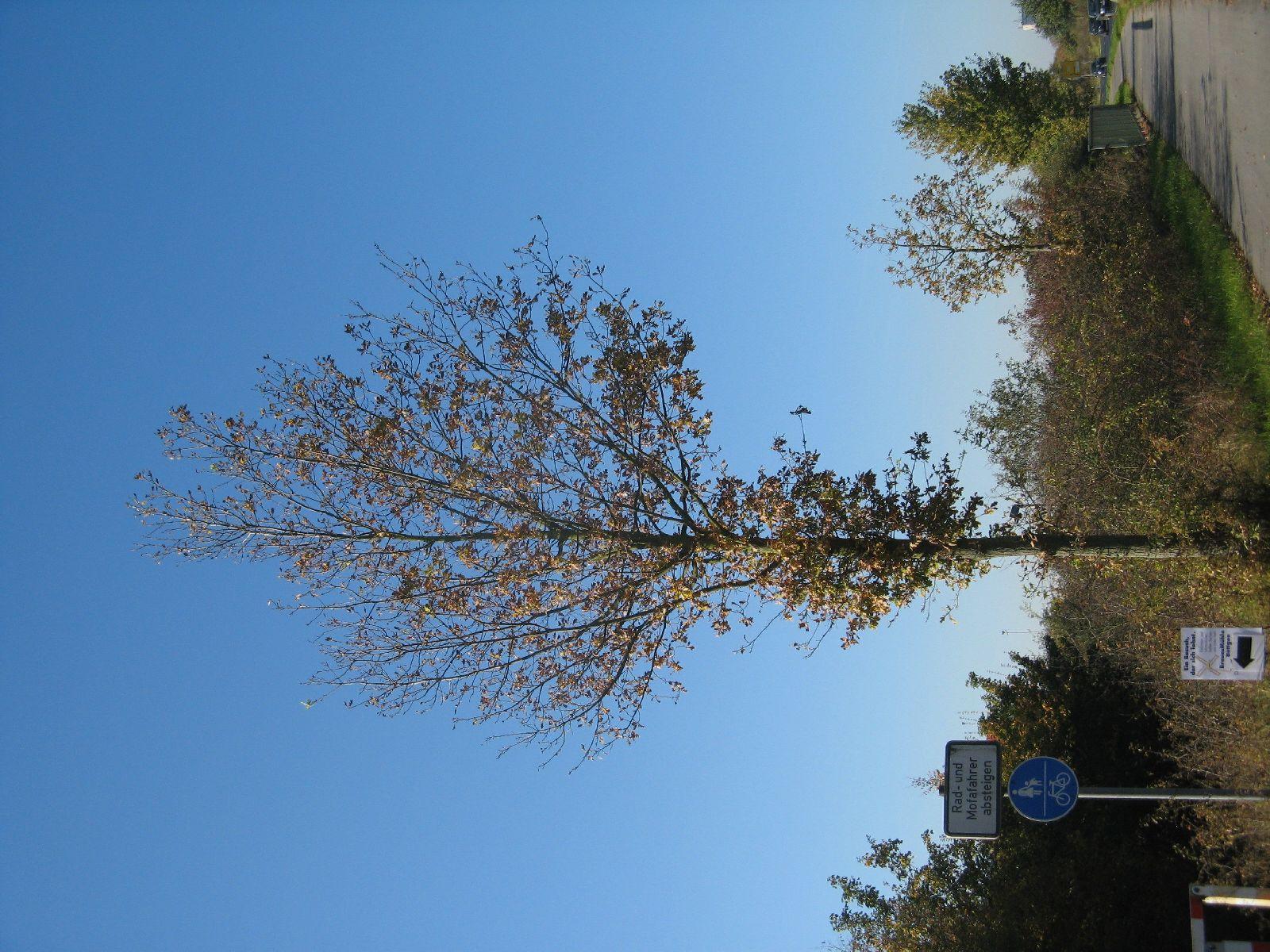 Plants-Trees_Photo_Texture_B_3735