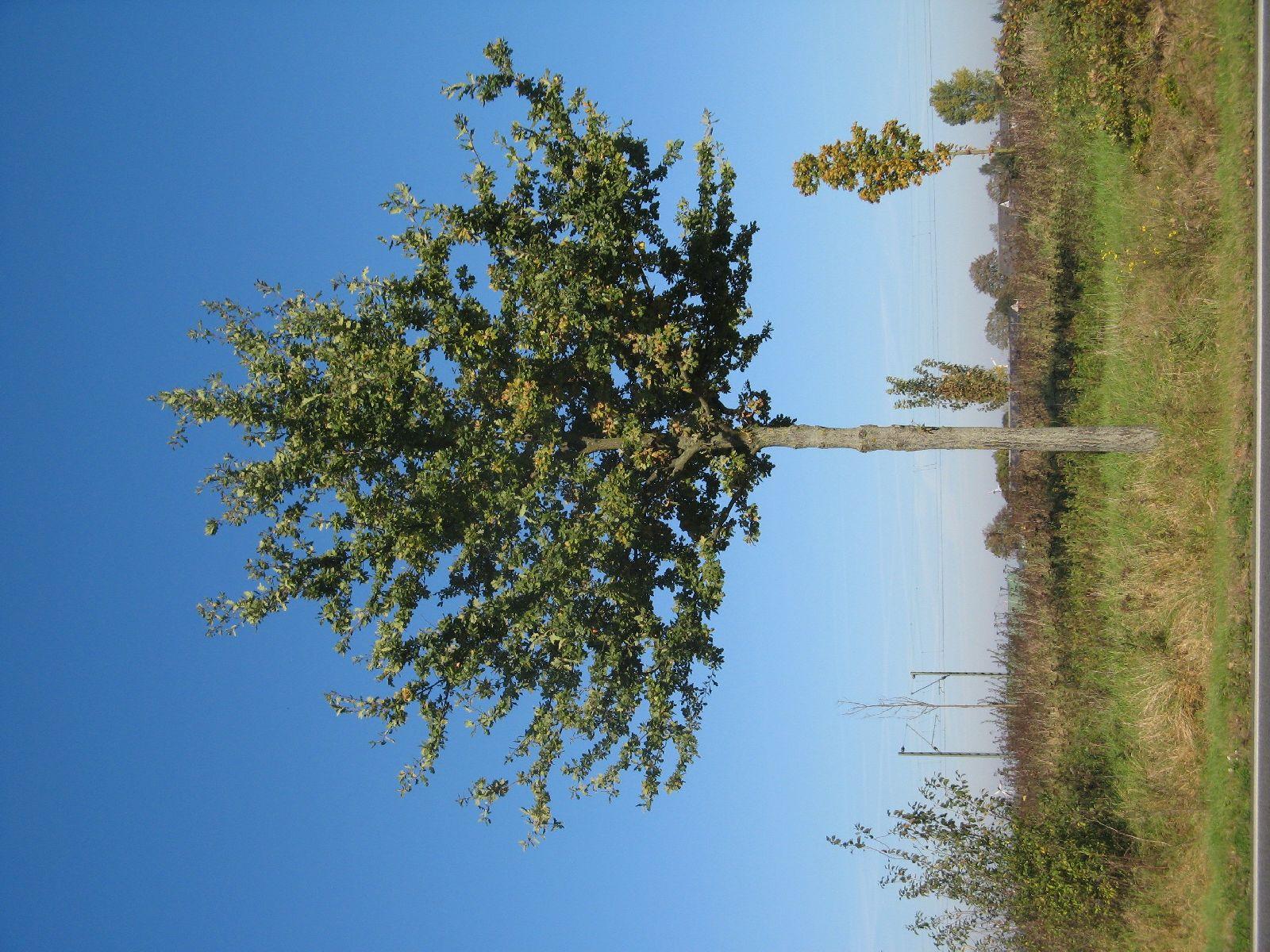 Plants-Trees_Photo_Texture_B_3738