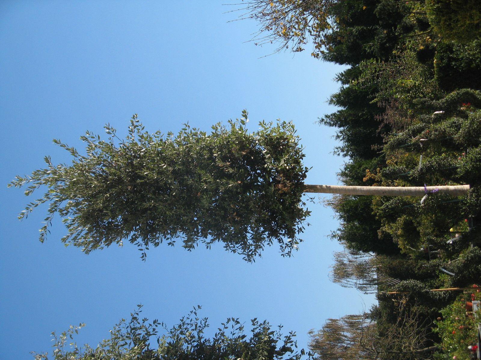 Plants-Trees_Photo_Texture_B_3740