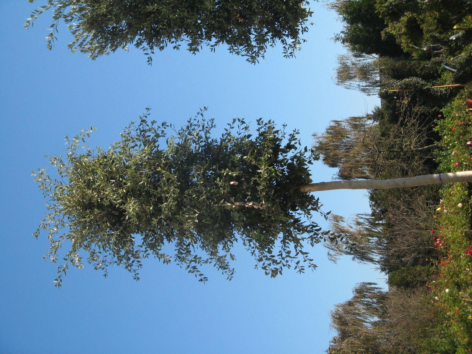 Plants-Trees_Photo_Texture_B_3741