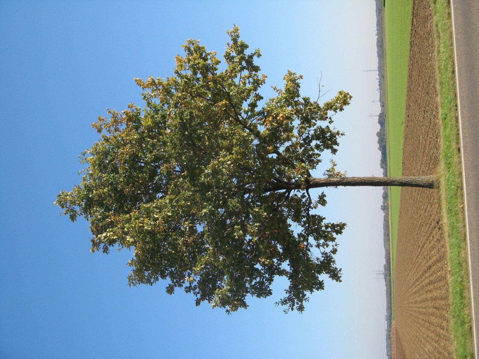 Plants-Trees_Photo_Texture_B_3748
