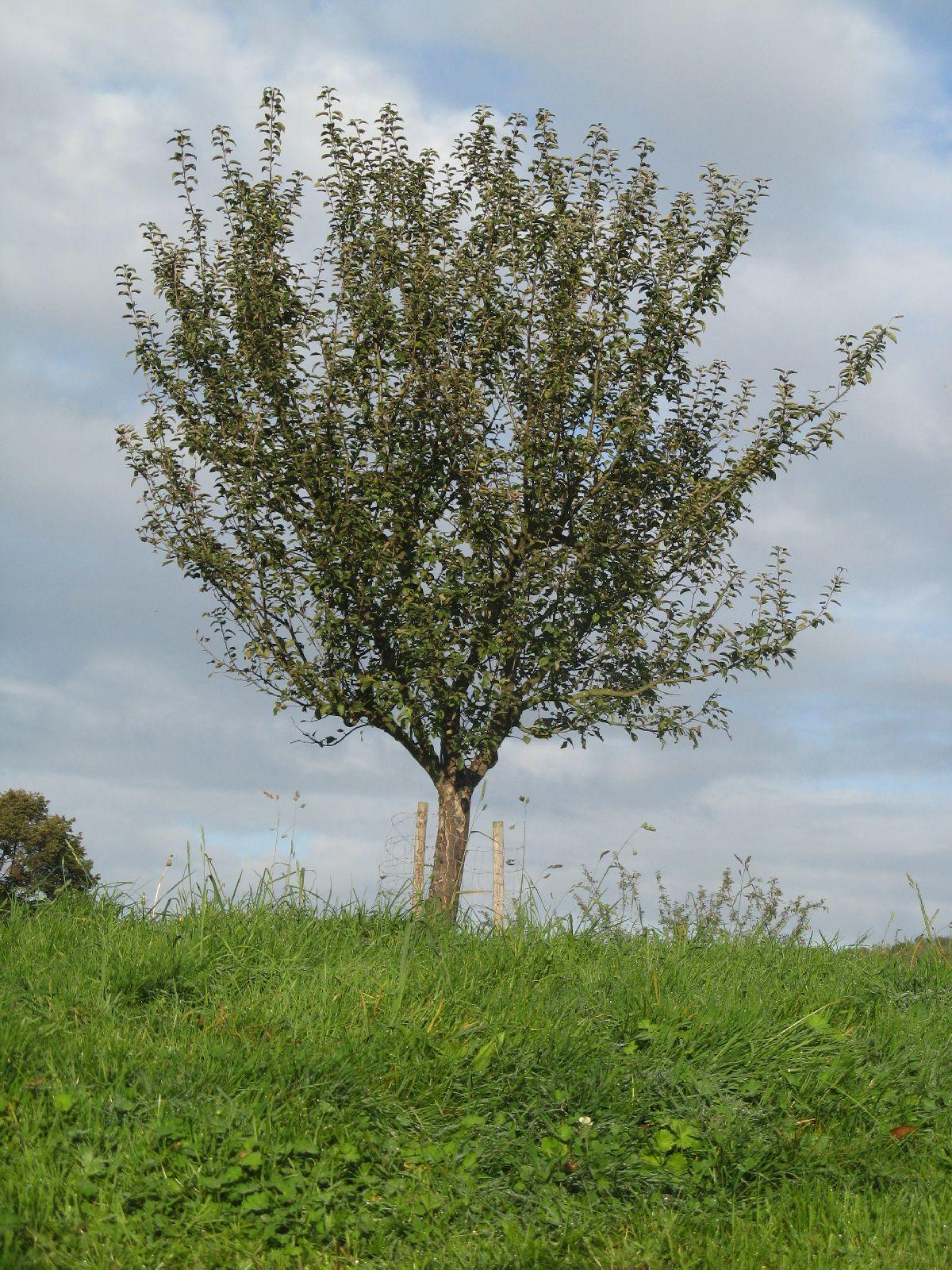 Plants-Trees_Photo_Texture_B_3762