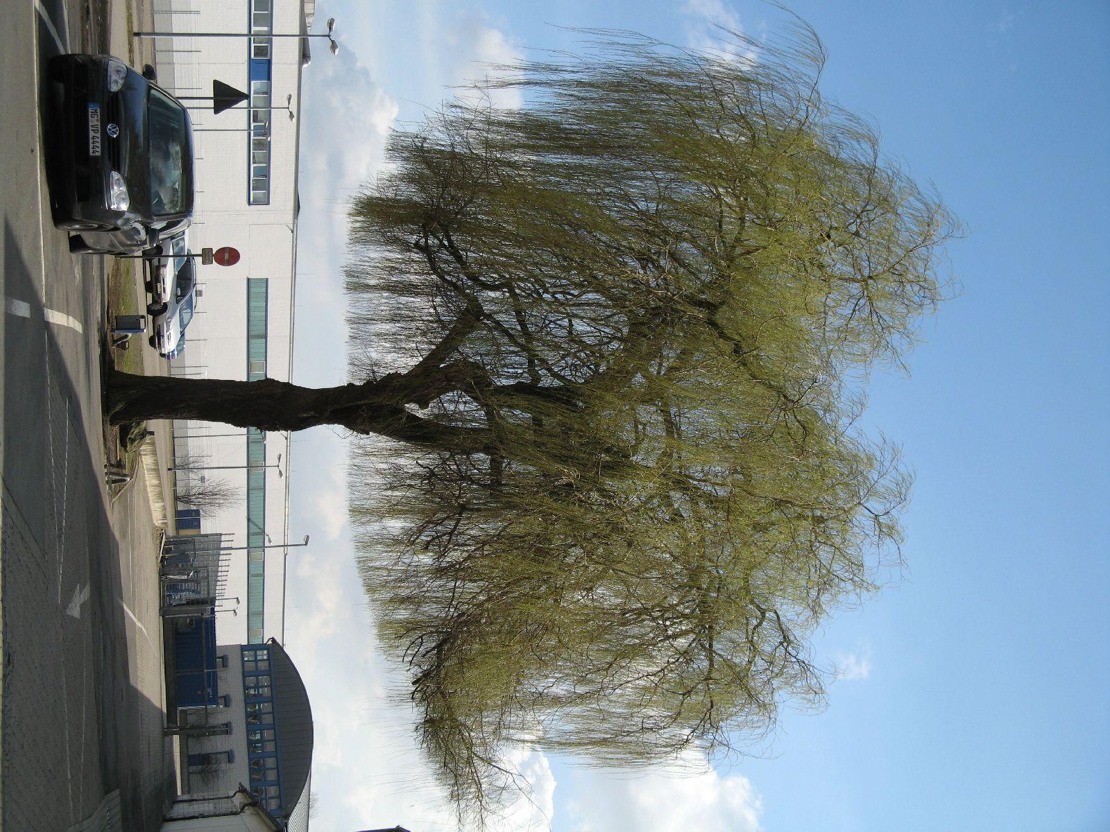 Plants-Trees_Photo_Texture_B_41240