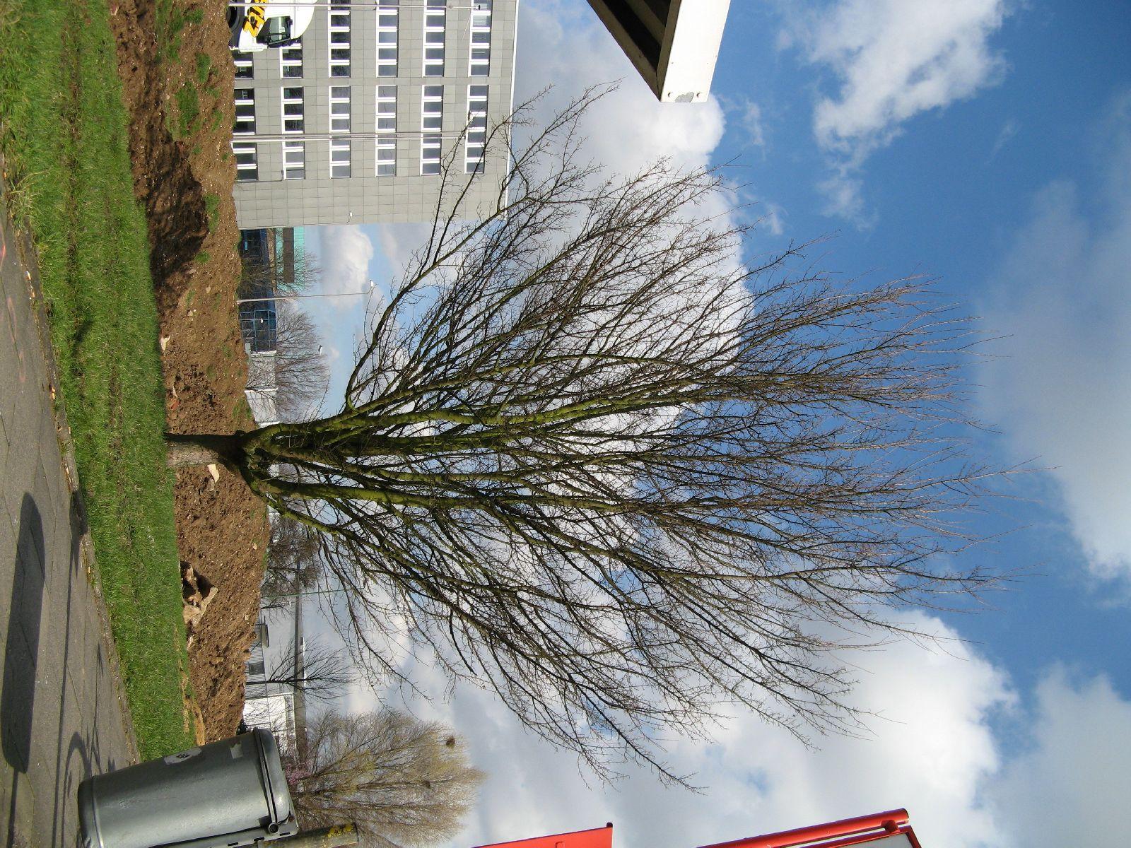 Plants-Trees_Photo_Texture_B_41270