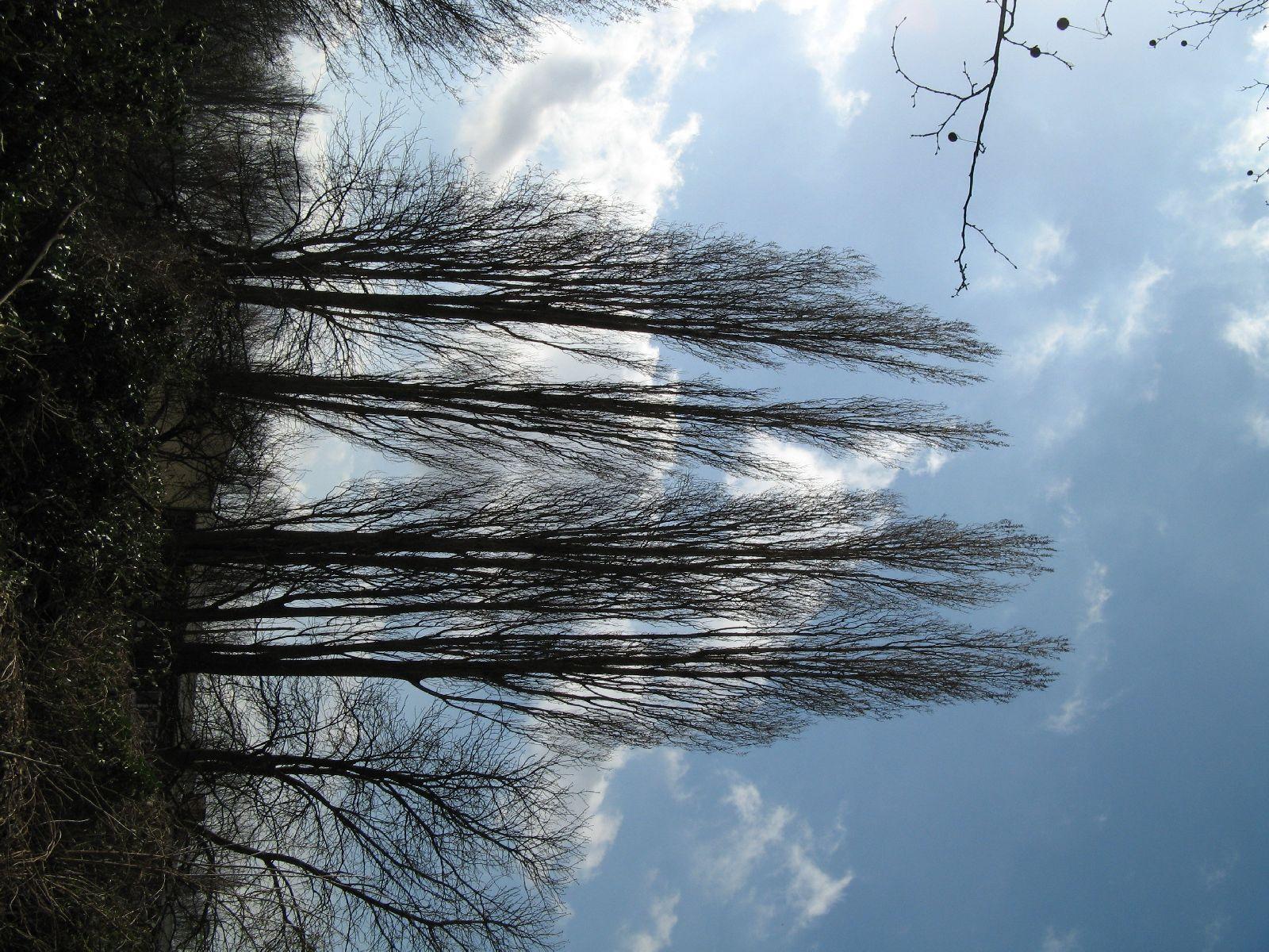 Plants-Trees_Photo_Texture_B_41310