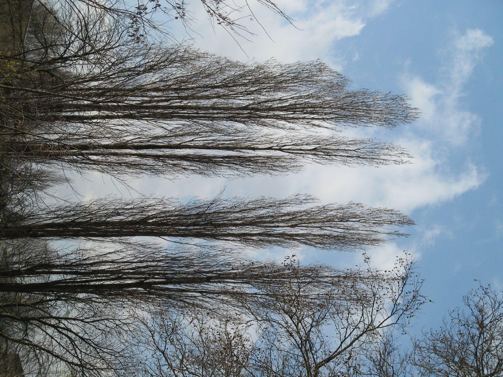 Plants-Trees_Photo_Texture_B_41320