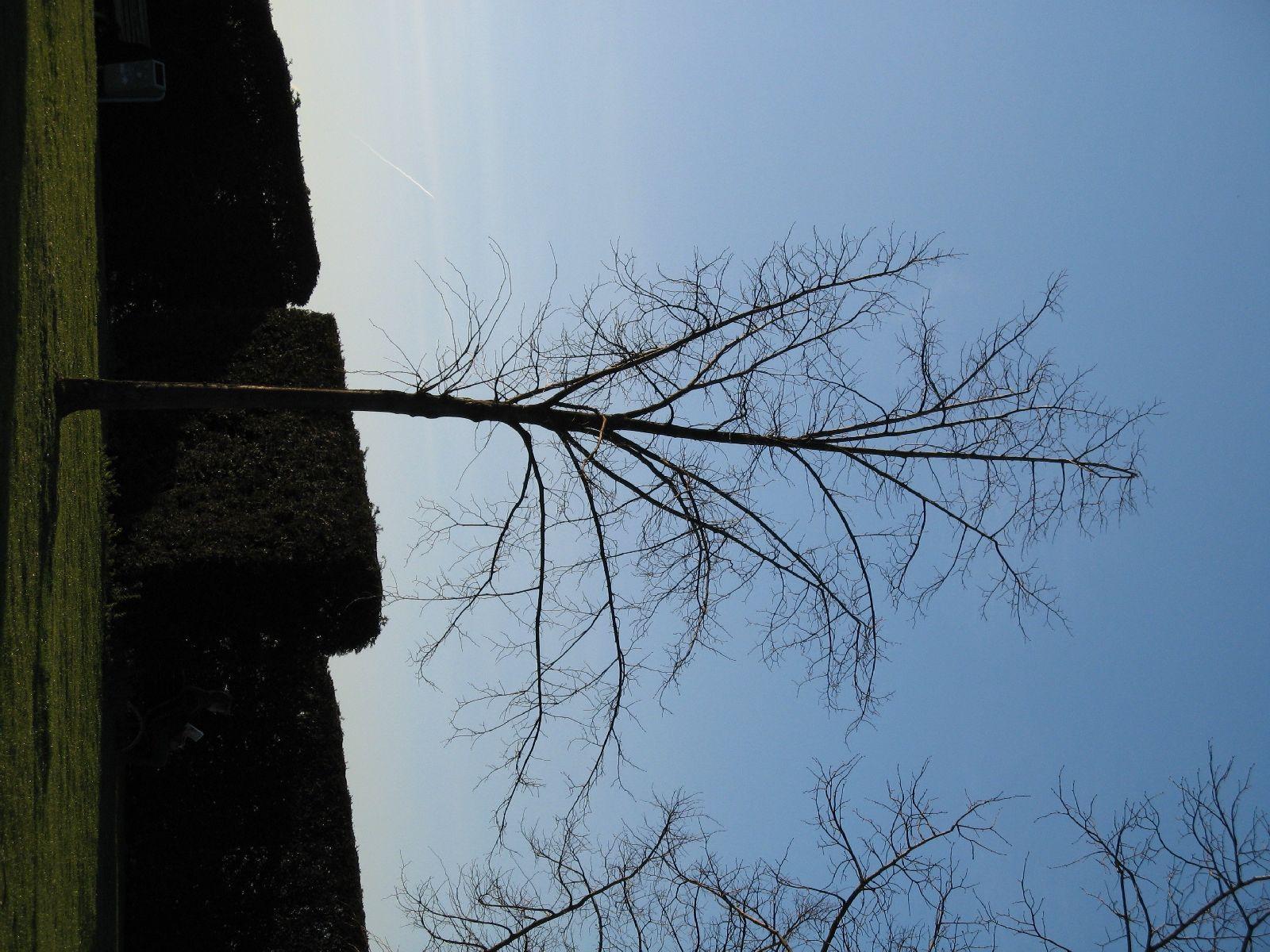 Plants-Trees_Photo_Texture_B_42070