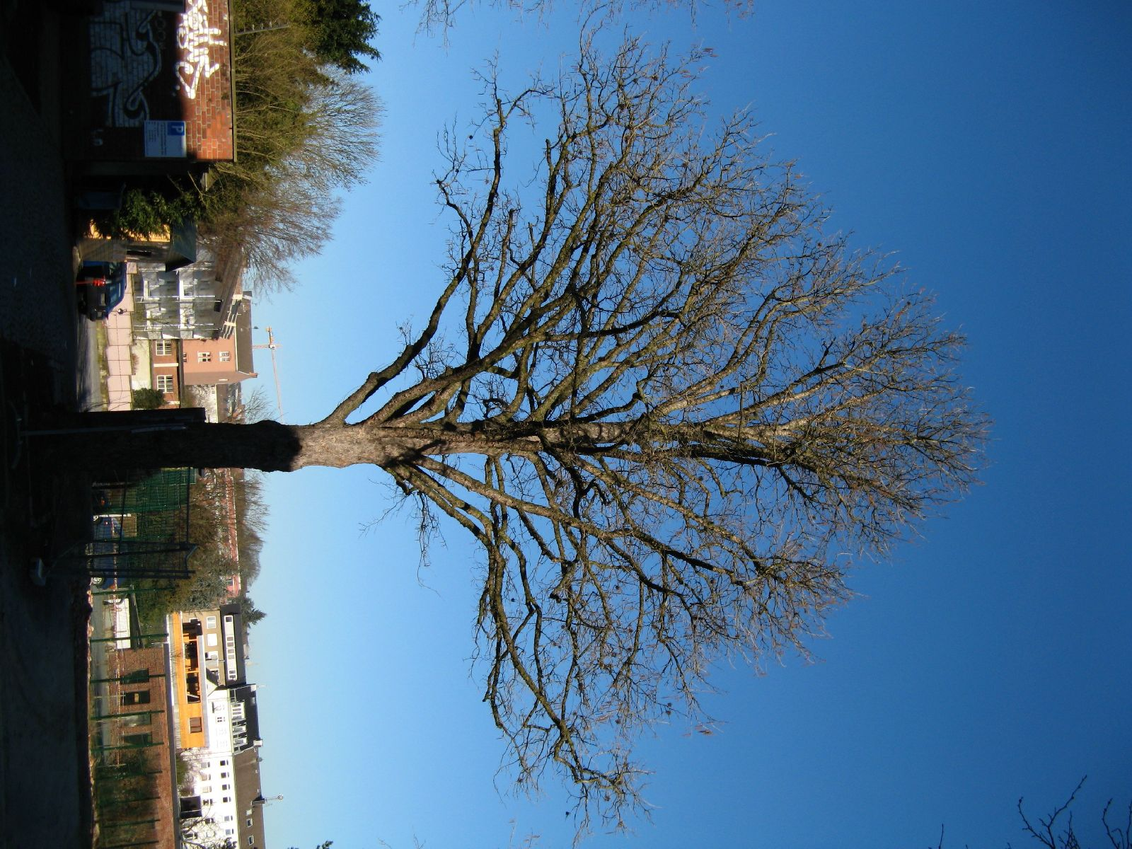 Plants-Trees_Photo_Texture_B_42300