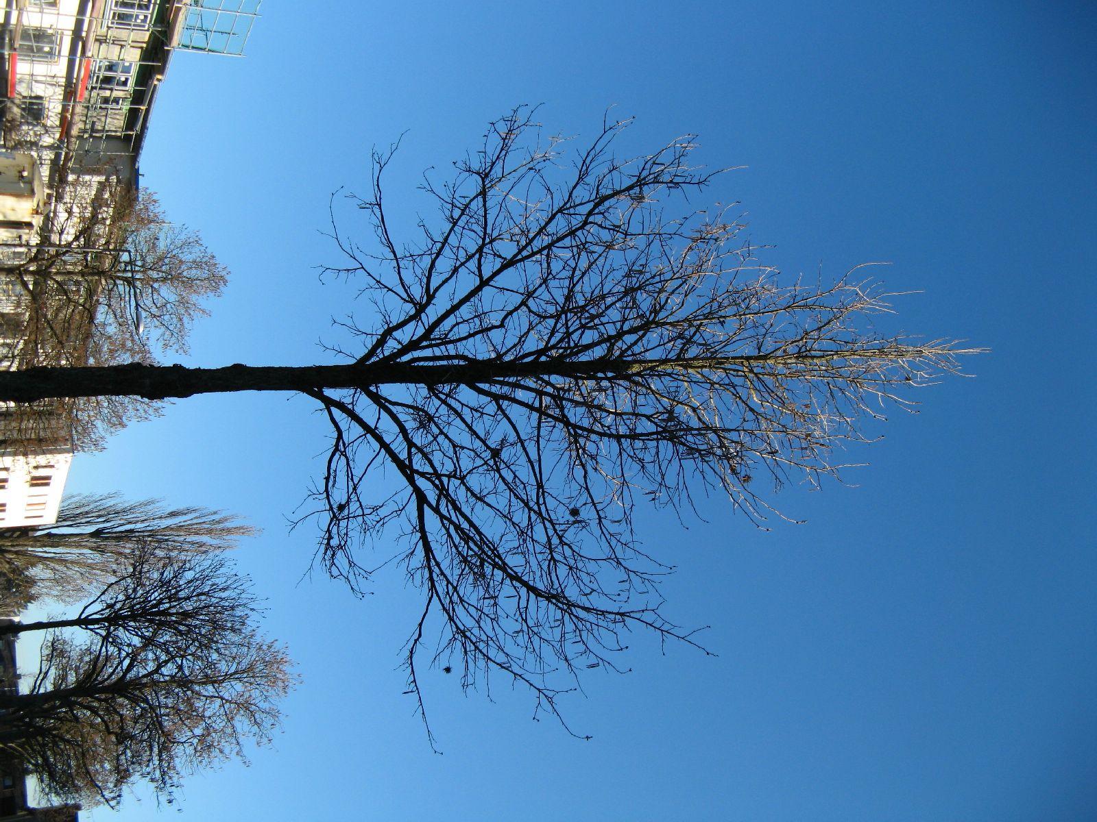 Plants-Trees_Photo_Texture_B_42360