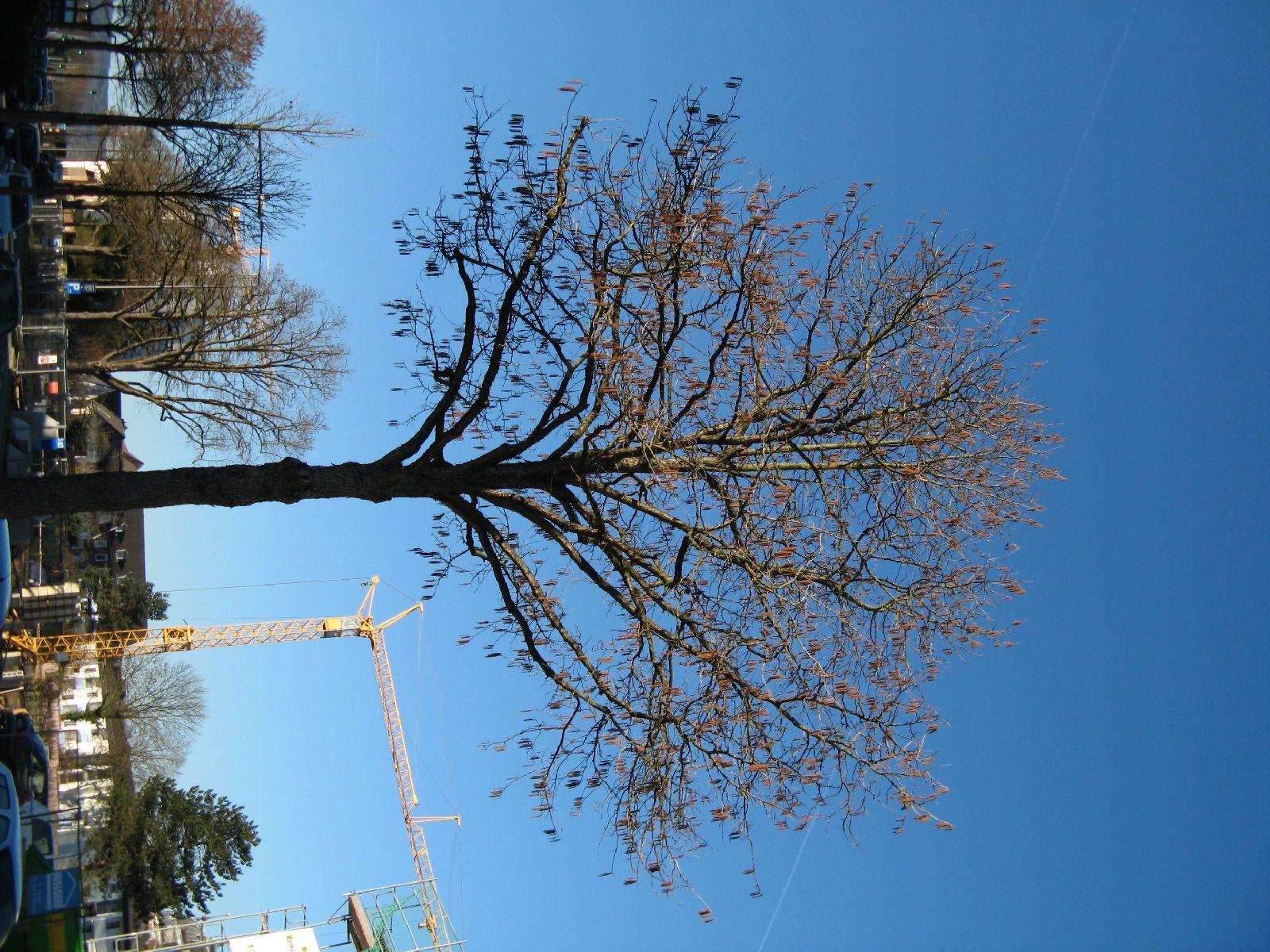 Plants-Trees_Photo_Texture_B_42380