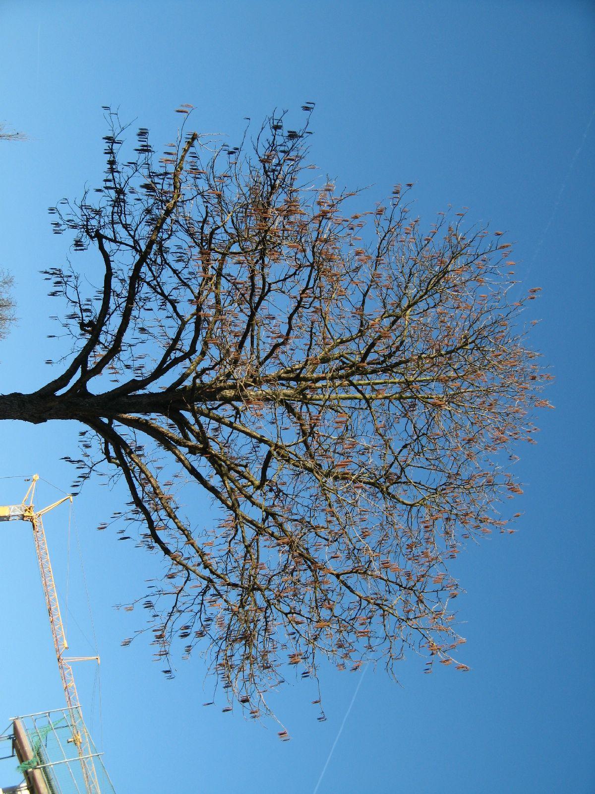 Plants-Trees_Photo_Texture_B_42390