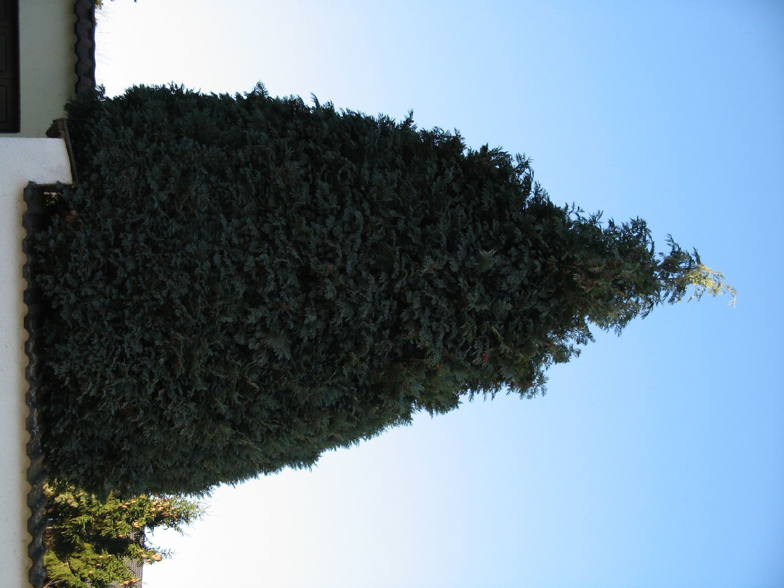 Plants-Trees_Photo_Texture_B_42430