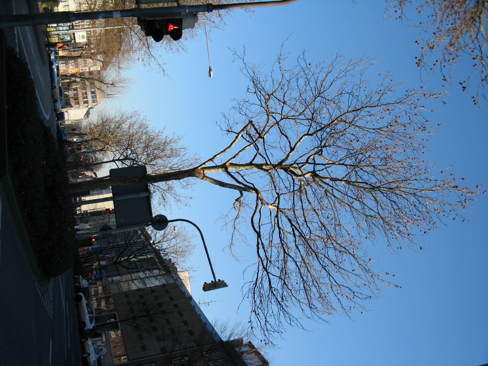 Plants-Trees_Photo_Texture_B_42490