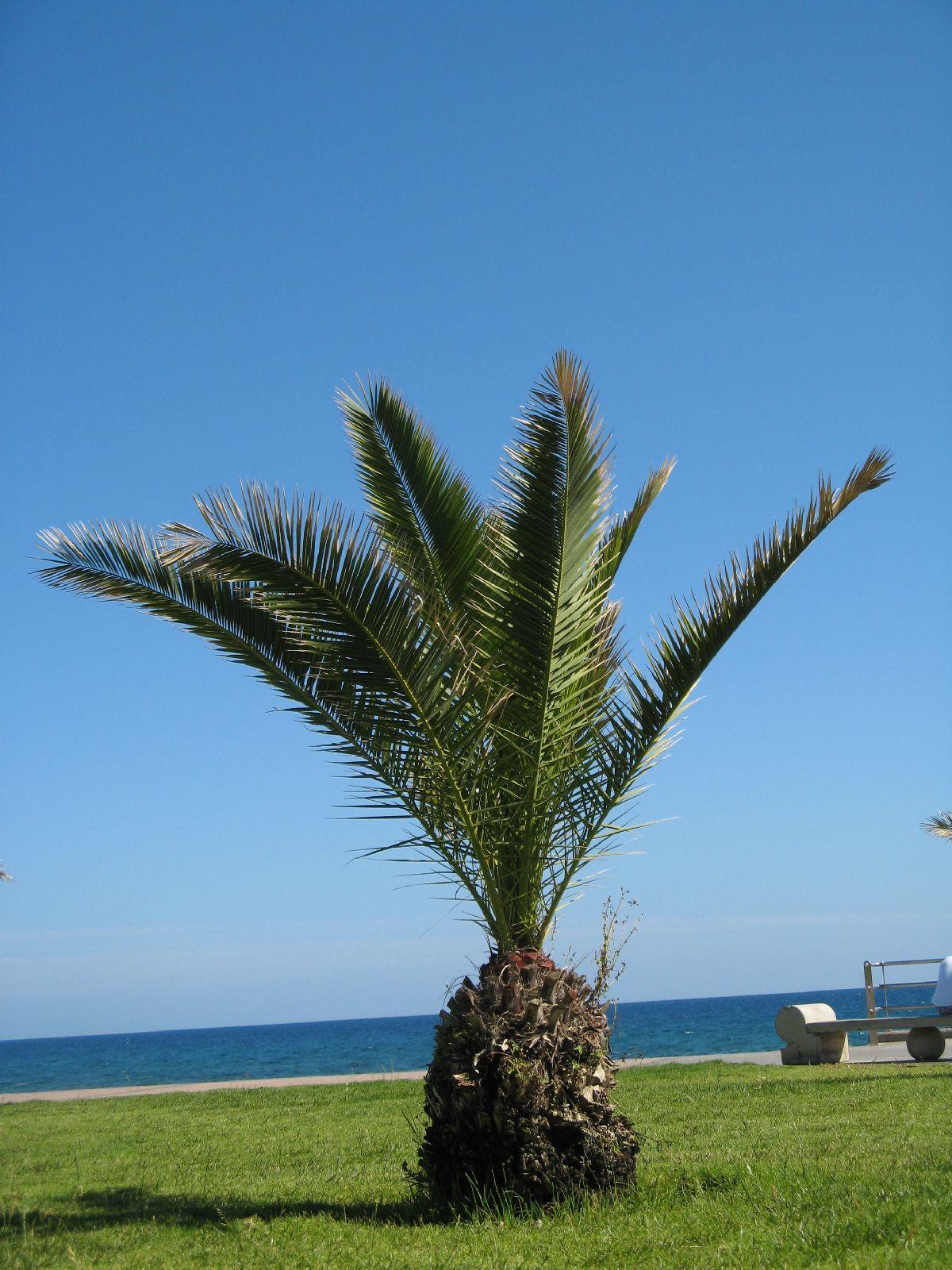 Plants-Trees_Photo_Texture_B_7689