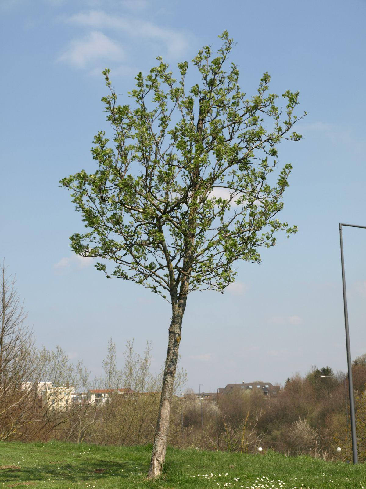 Plants-Trees_Photo_Texture_B_P4171282