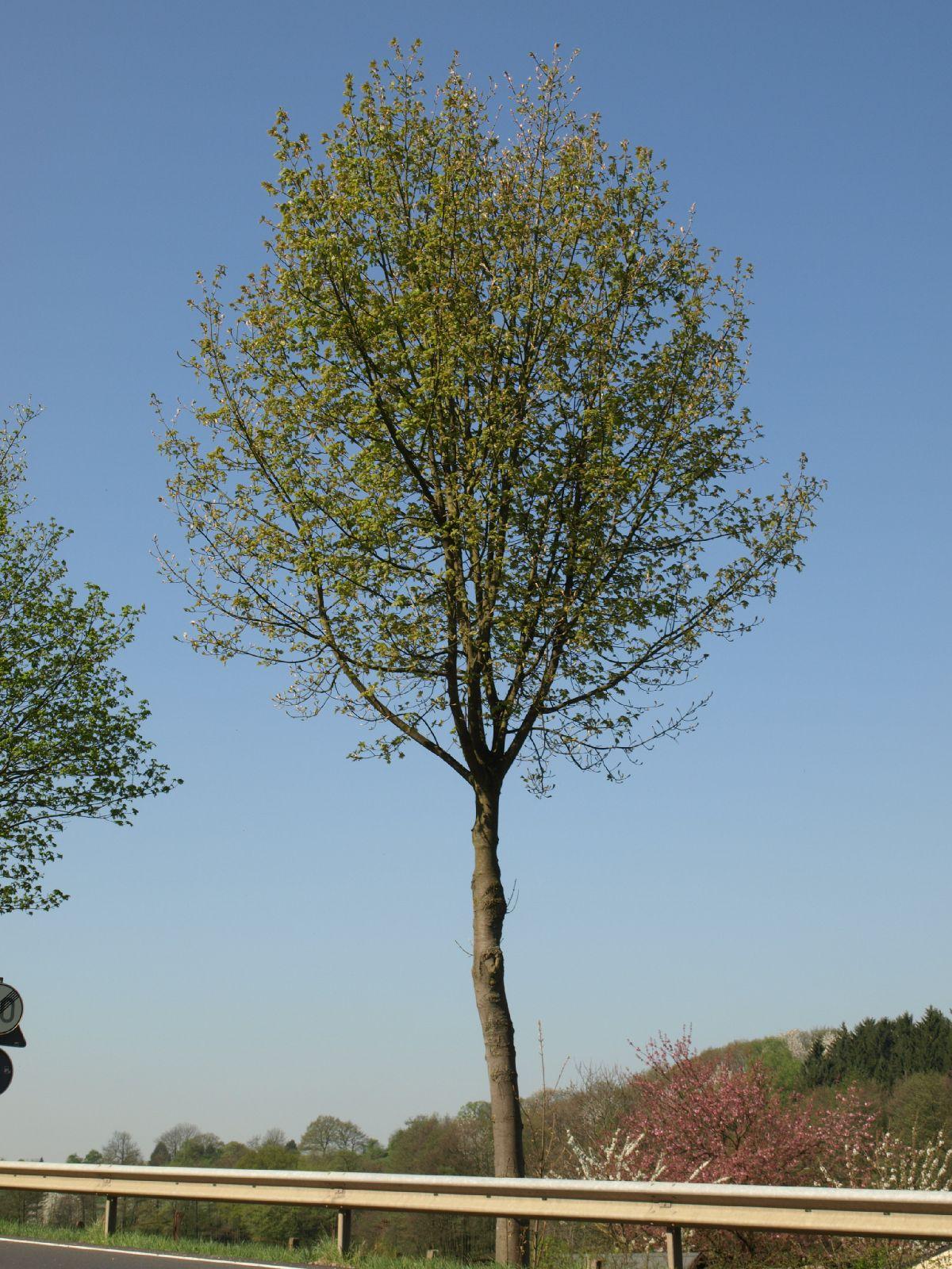 Plants-Trees_Photo_Texture_B_P4212492